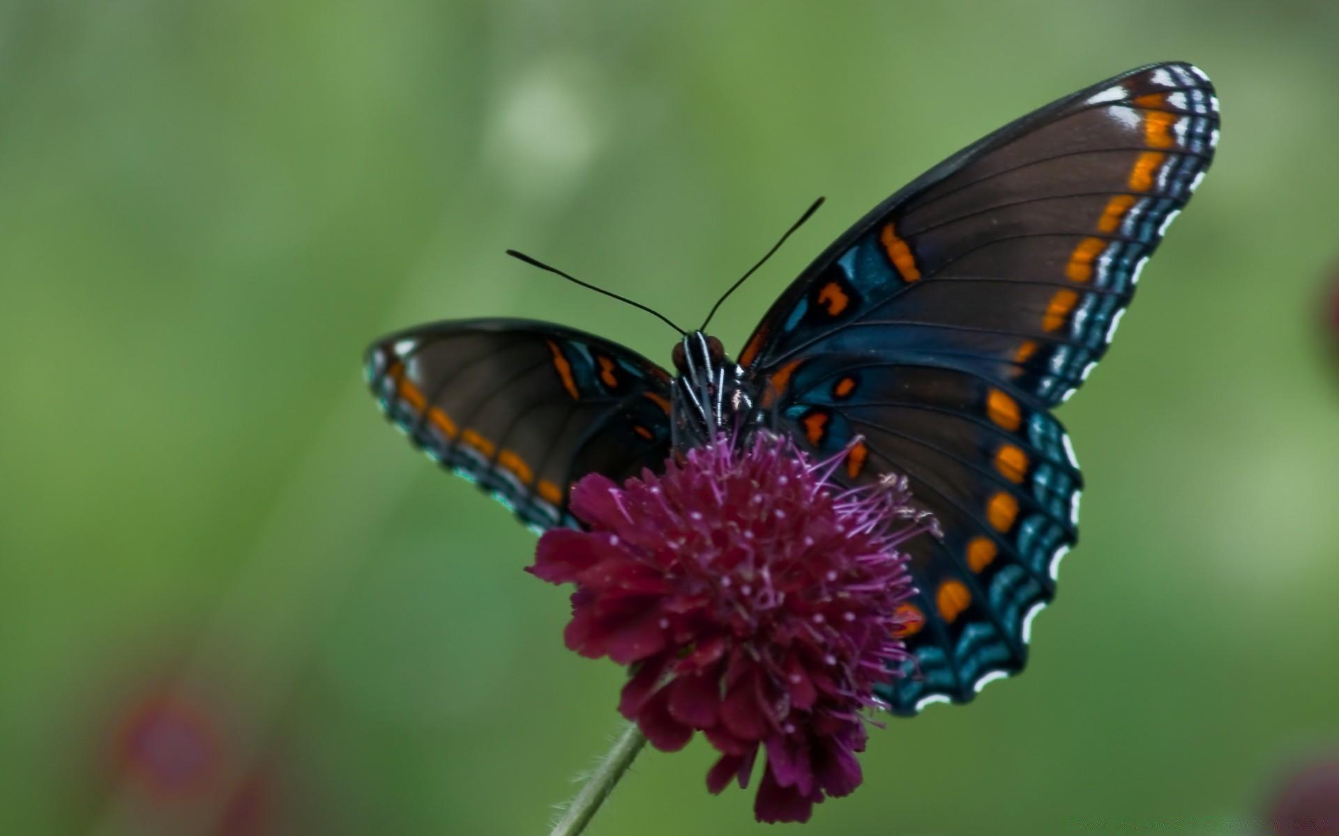 Днем рождения, картинки на рабочий стол бабочки красивые