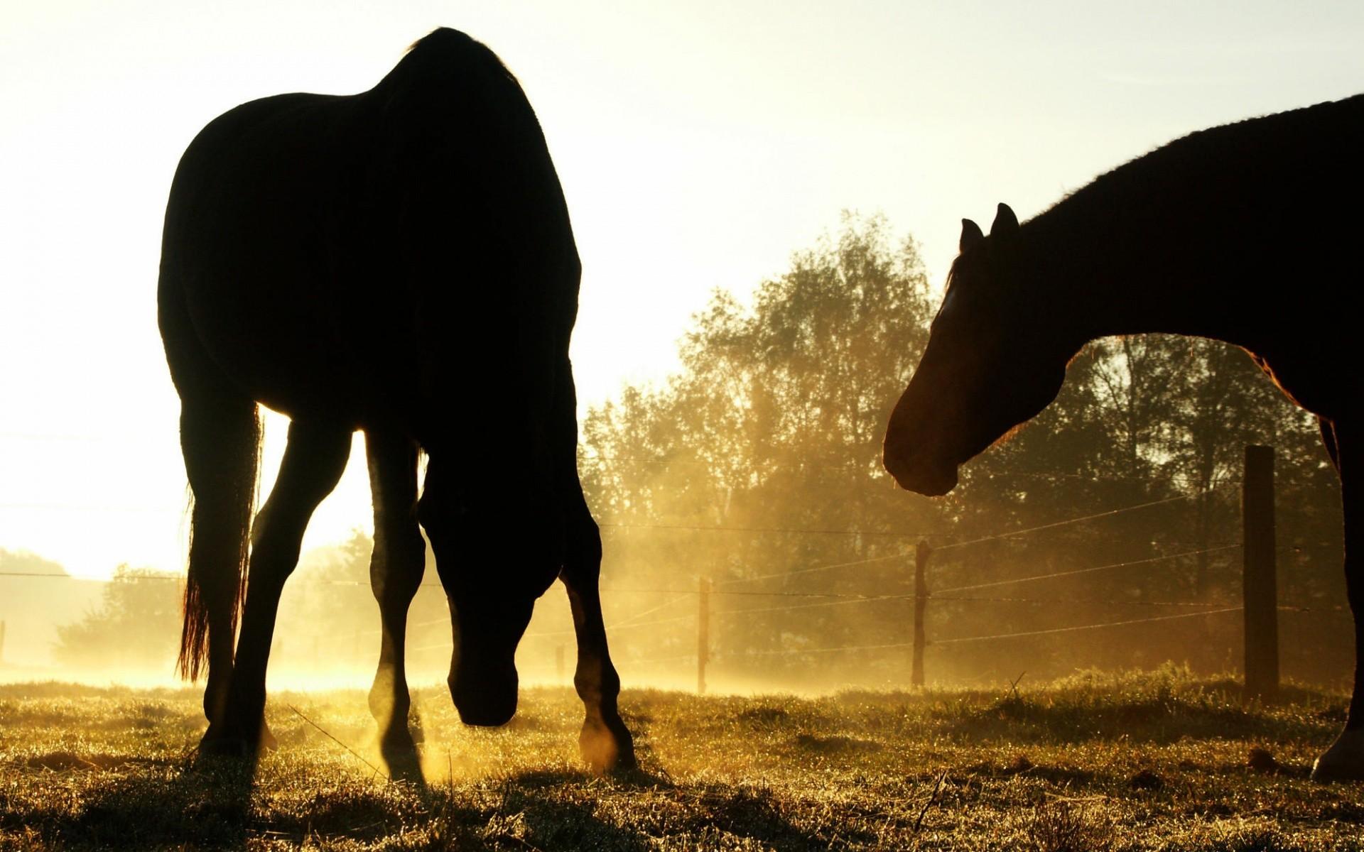 лошади тени ночь  № 359558 без смс