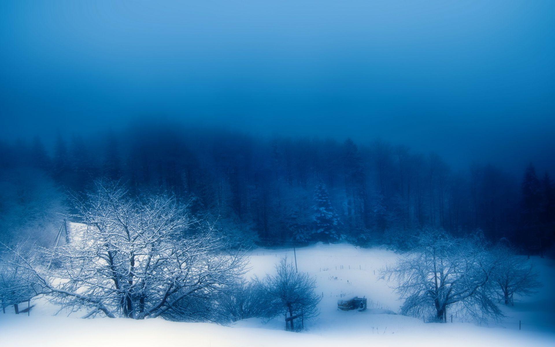 Зимний голубой лес картинки