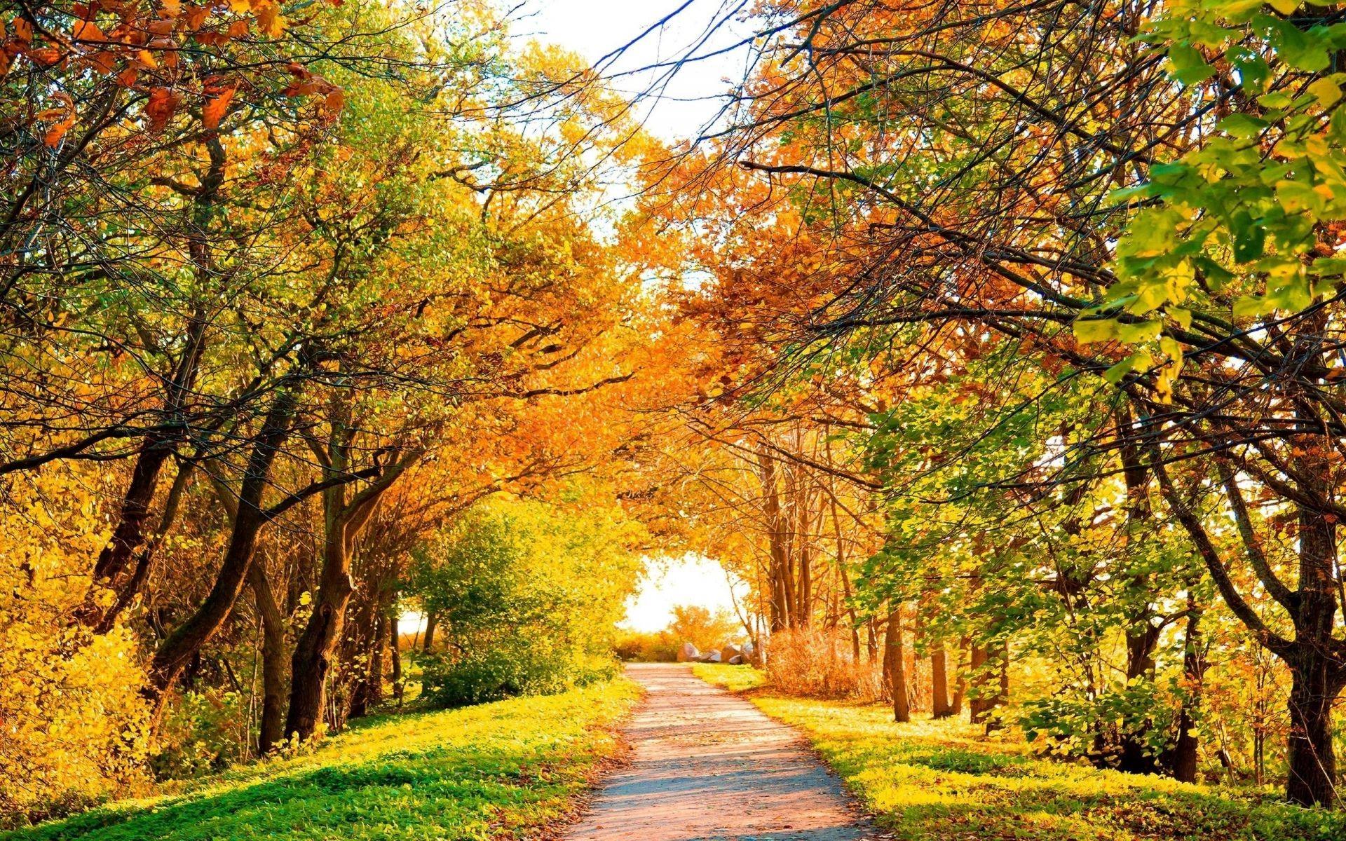 Картинки осень природа, прикольные