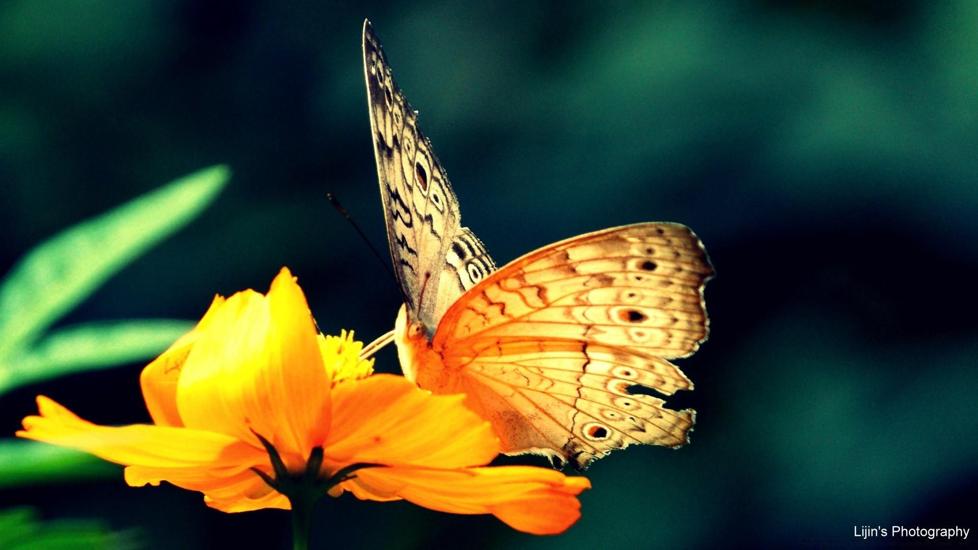 Картинки бабочки и цветы для рабочего стола