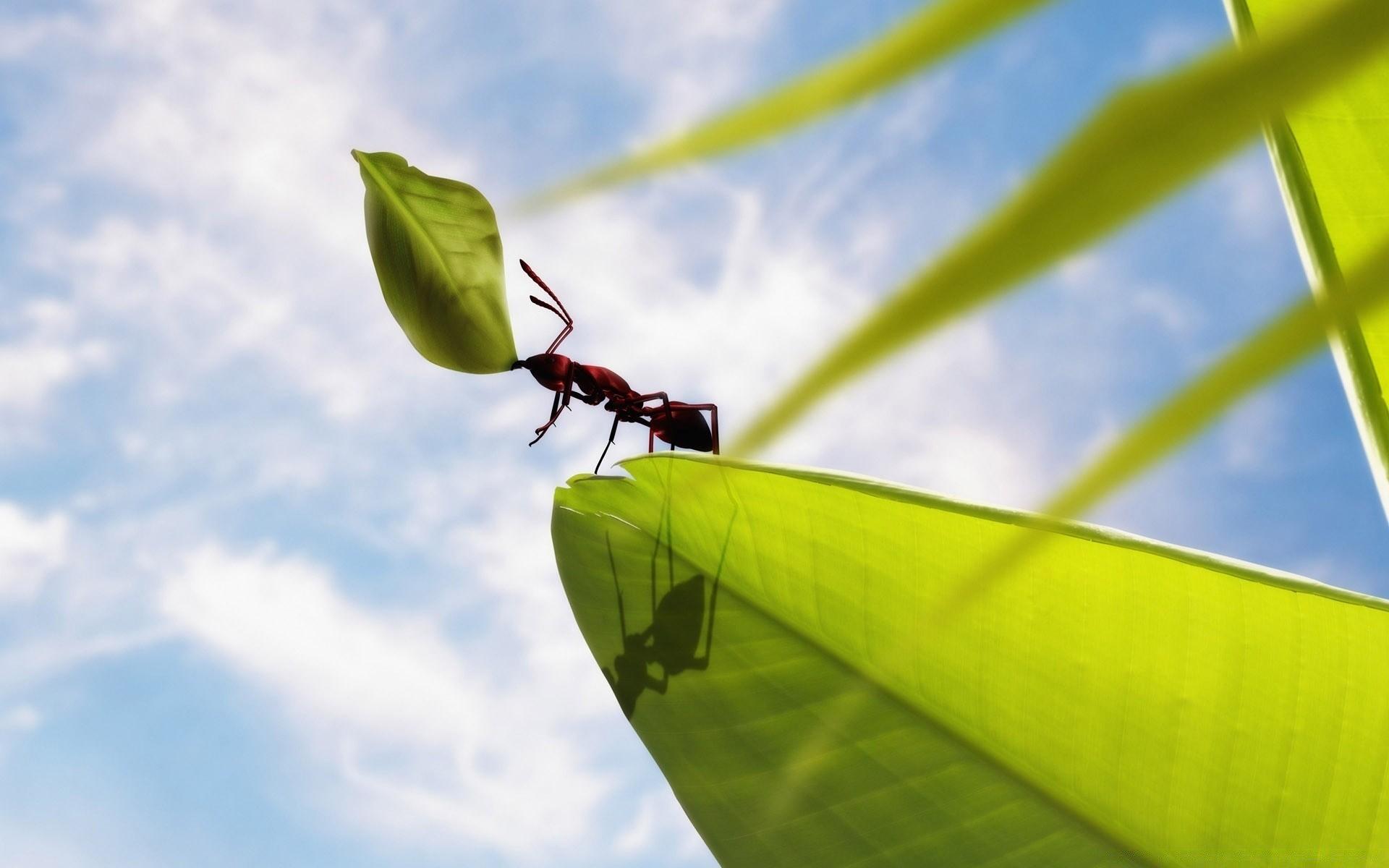 короля обои на рабочий стол муравей экологически чистого материала