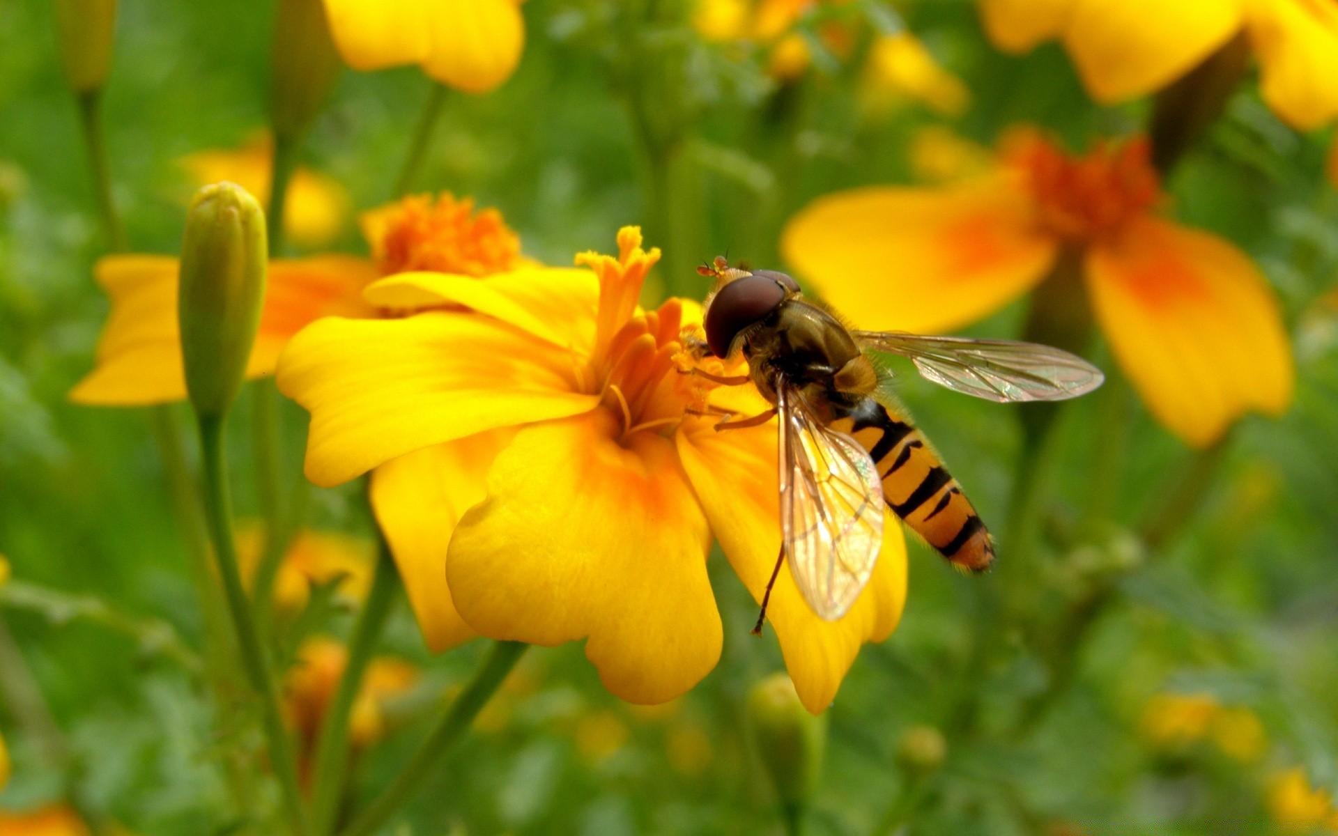 потолочный картинка яркая пчелы светлых