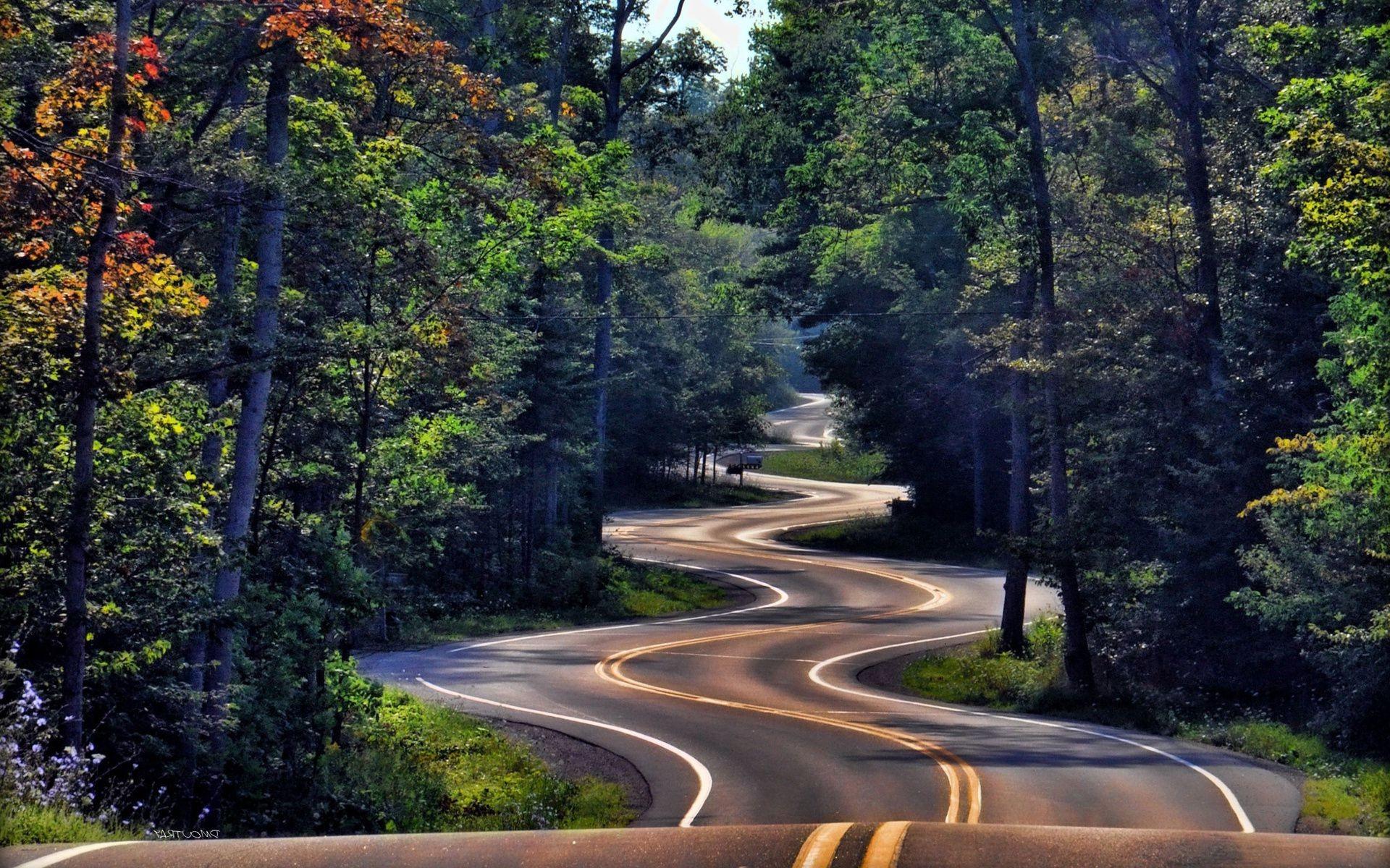 дорога лес road forest бесплатно