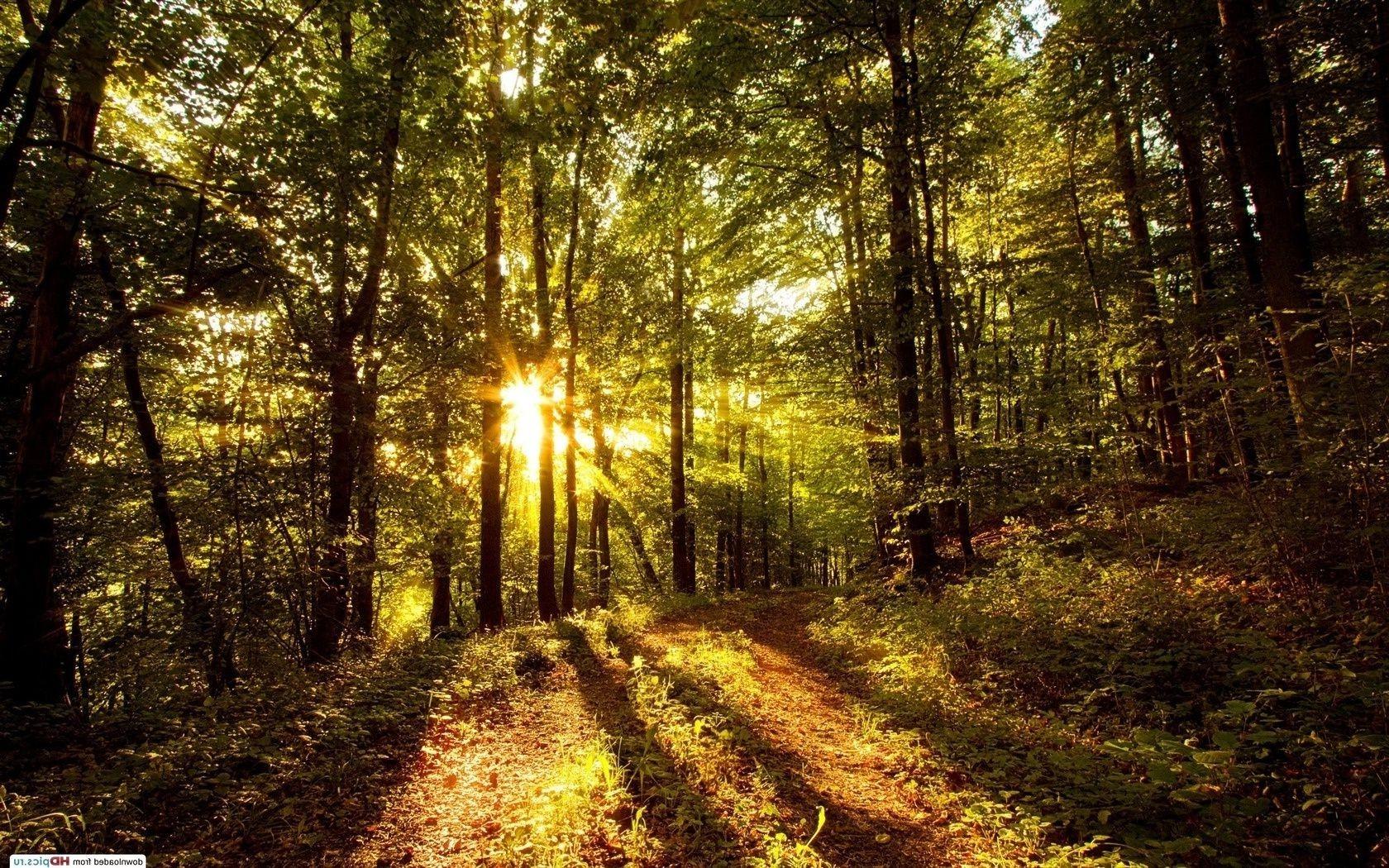 рассвет фото солнца
