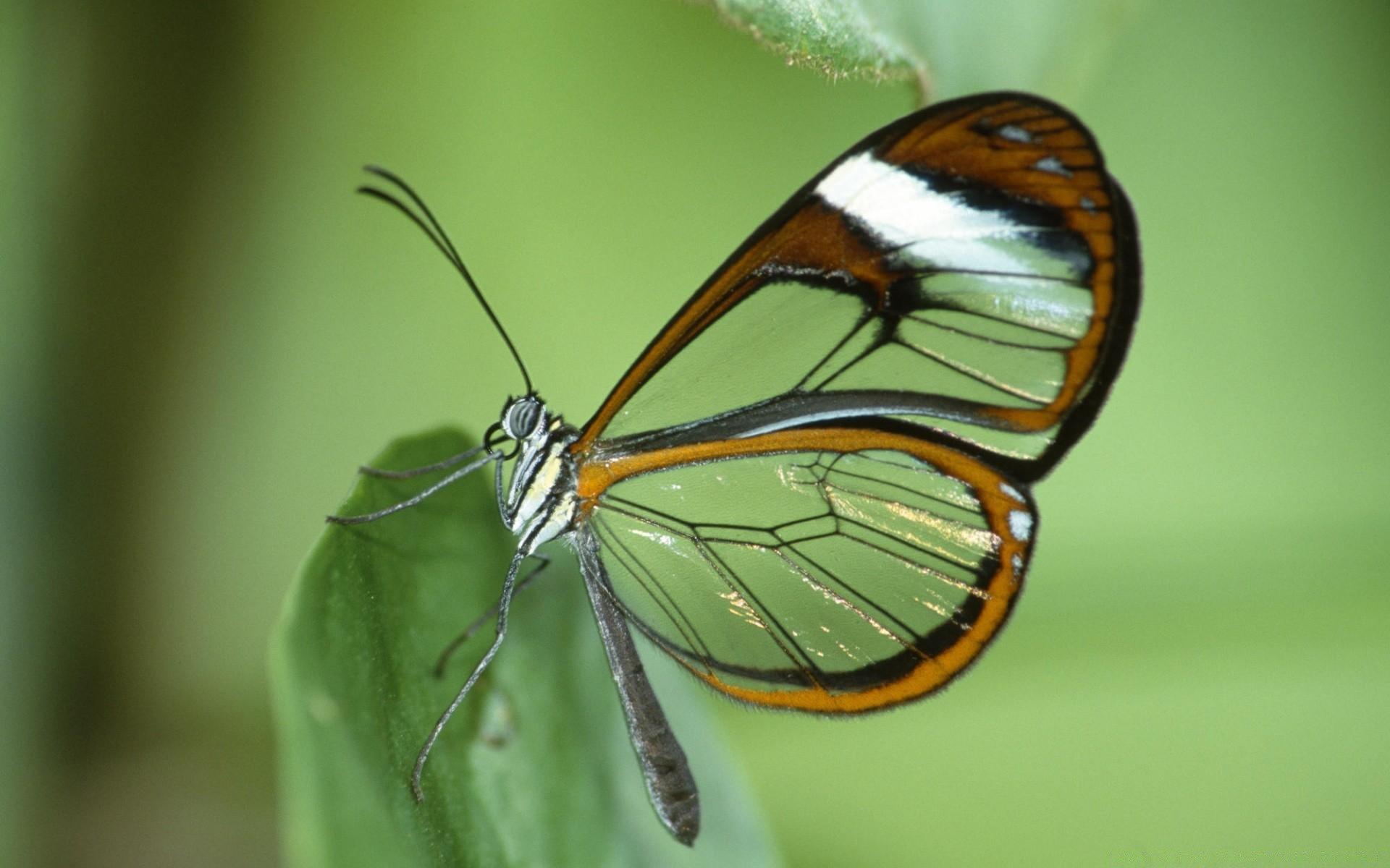 оцеплении картинки с прозрачными крыльями уроки рисованию