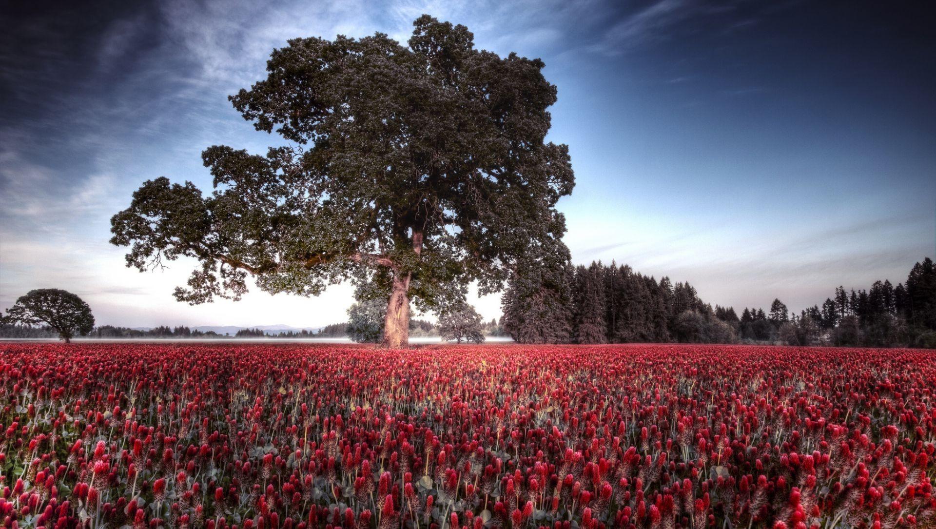 природа деревья поле бесплатно