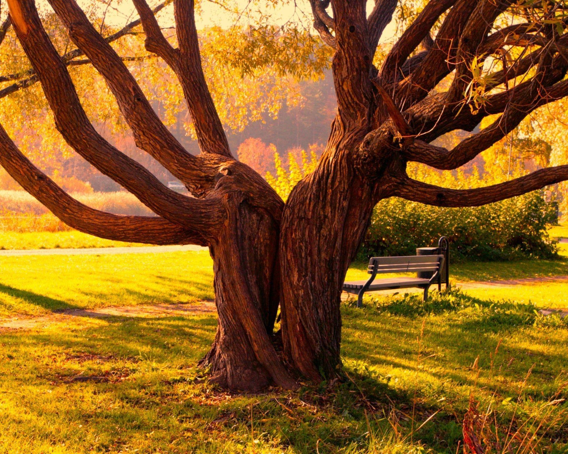 дерево скамейка закат трава загрузить