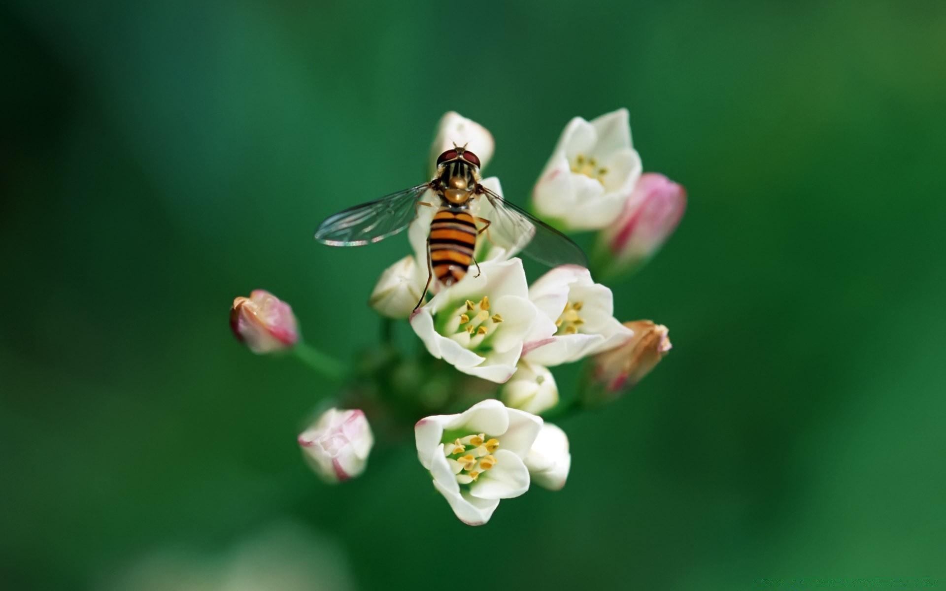 бабочка цветы опыление  № 3353537 загрузить