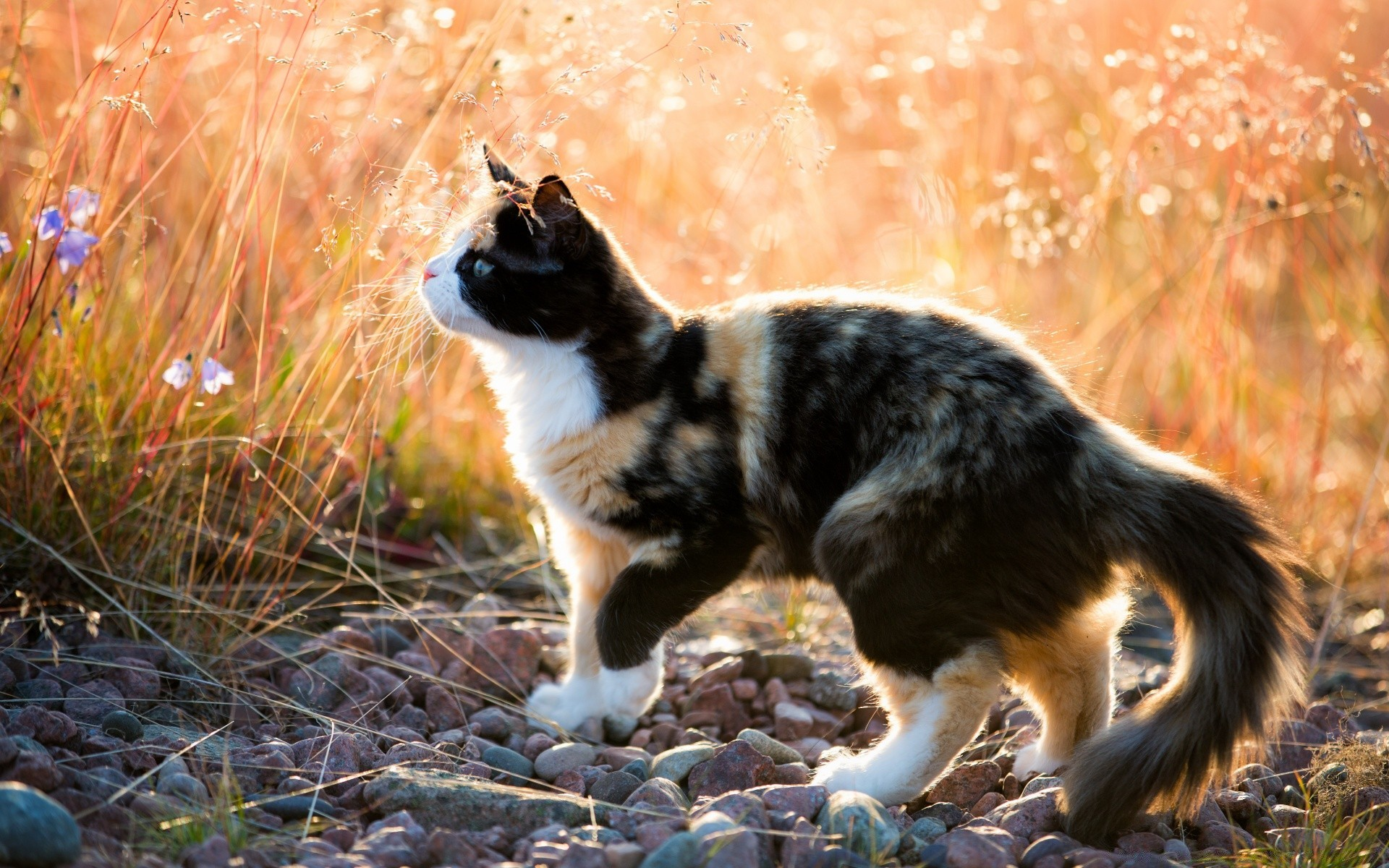 Cat marking territory stop