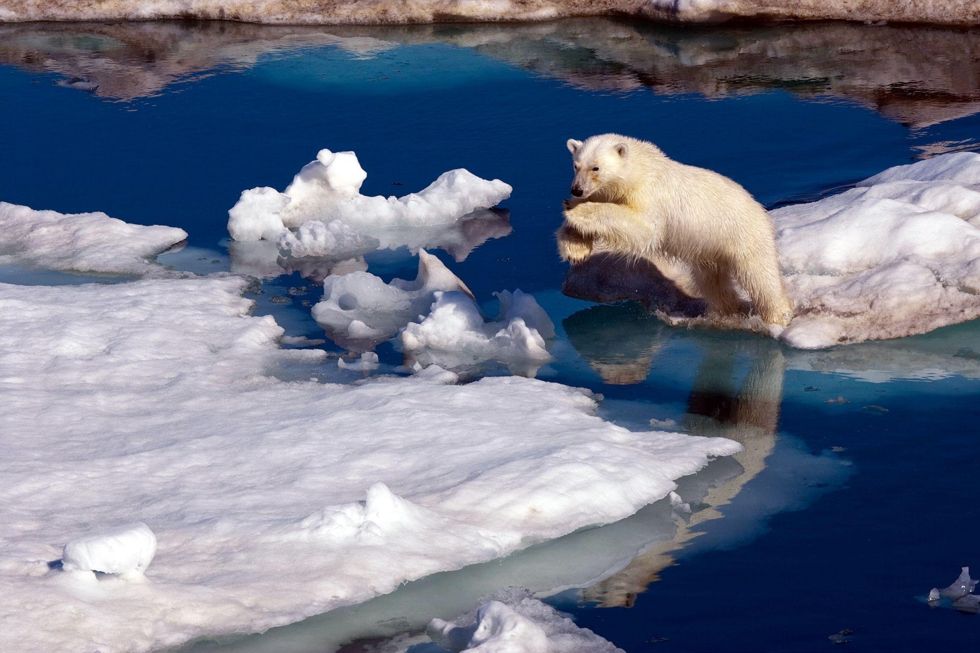 Картинки белого медведя на льдине