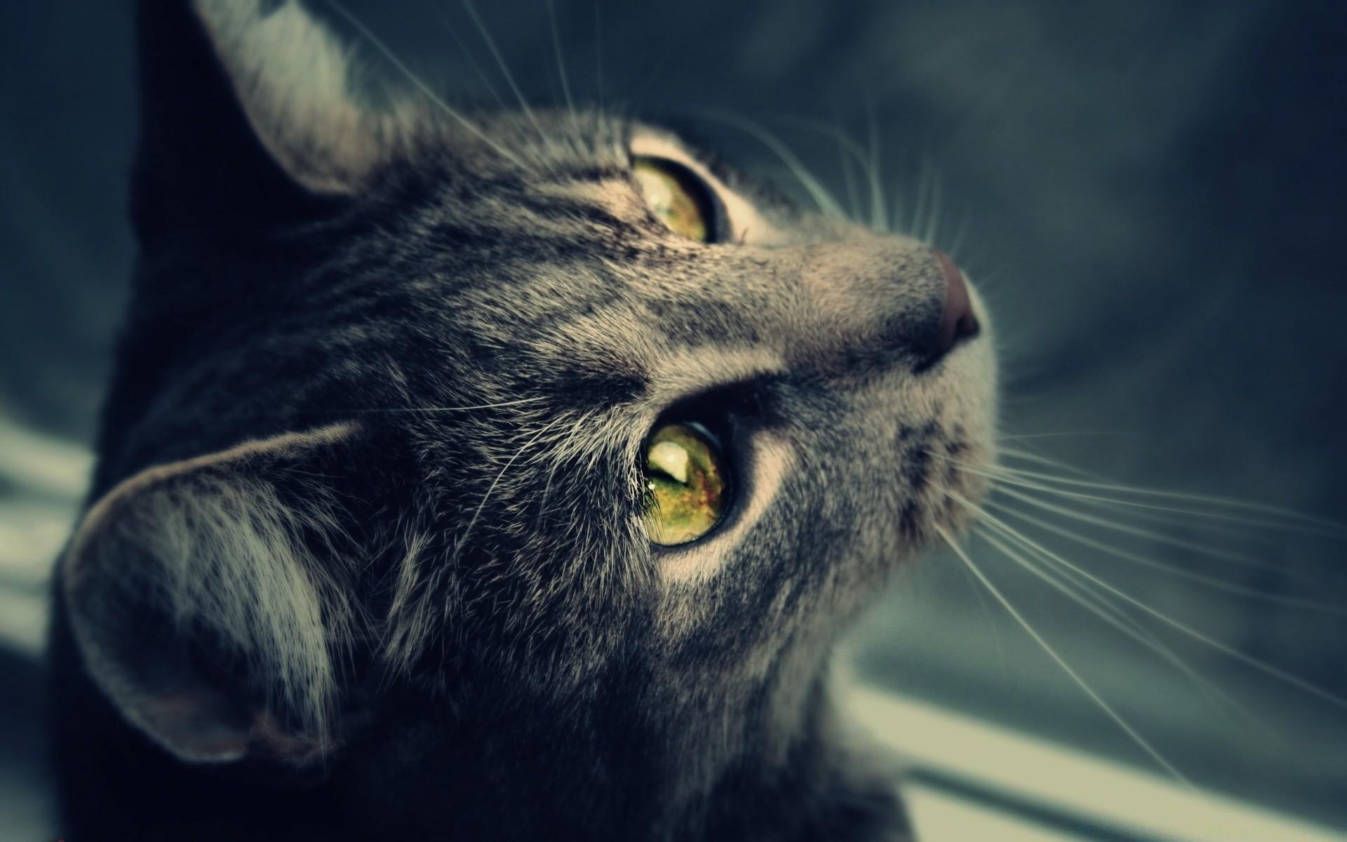 Картинка на аву кошка