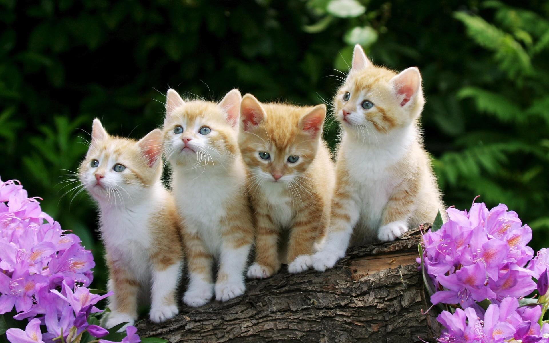 женщины картинки котов и котят красивые тех, кто любит