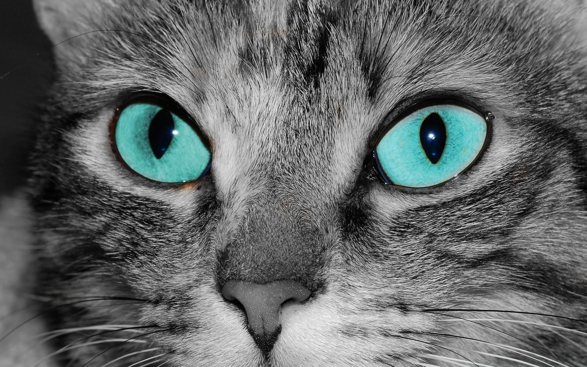 Красивые кошачьи глаза картинки
