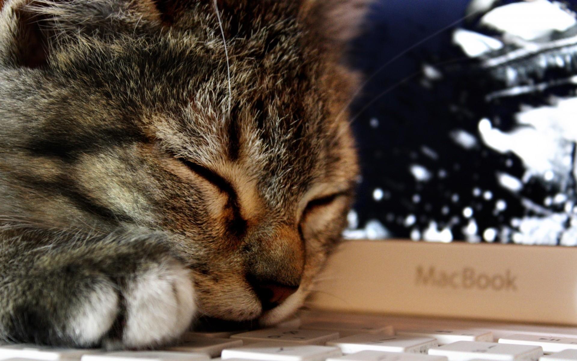 Прикольные сын, картинки котят на ноутбук