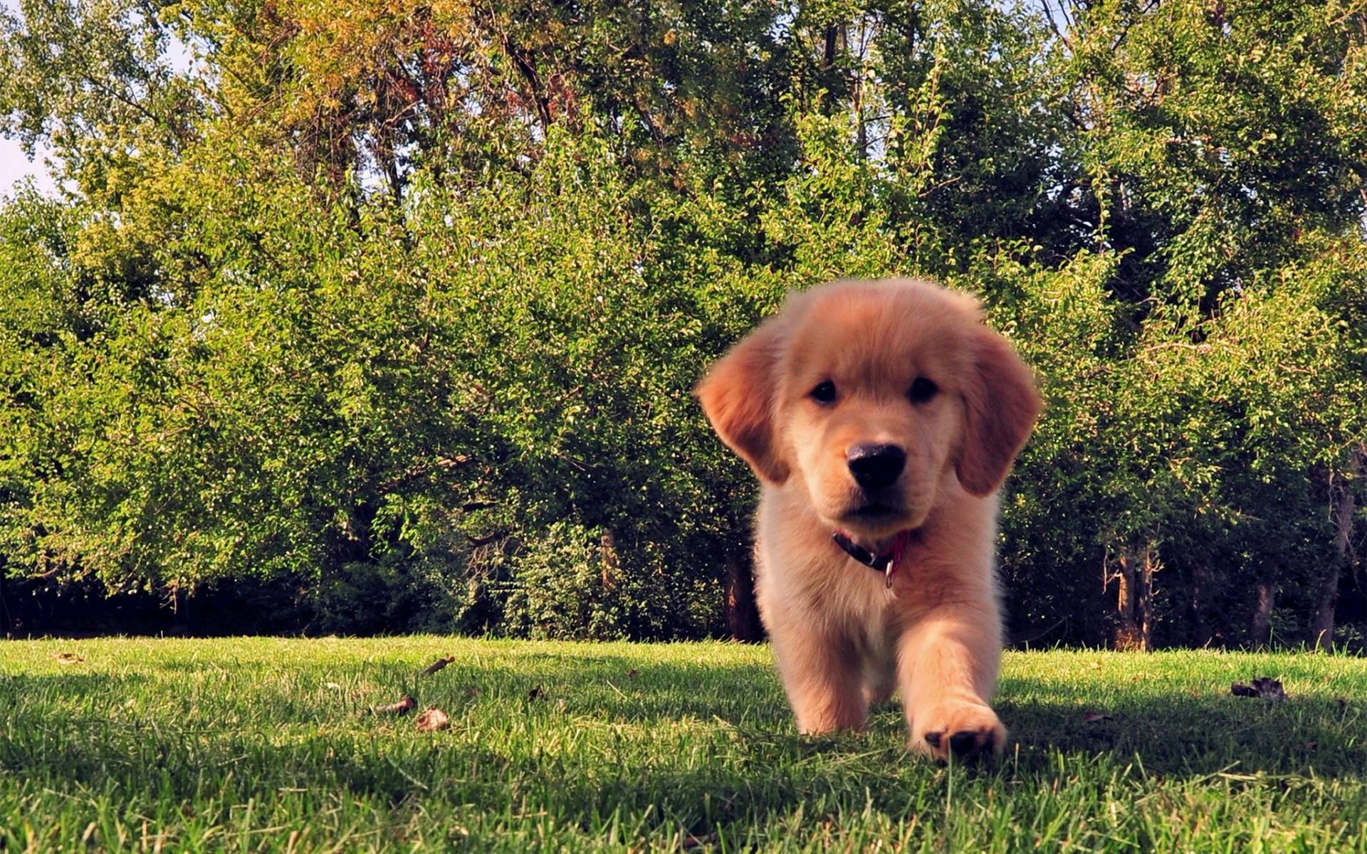 Картинки собаки на заставку