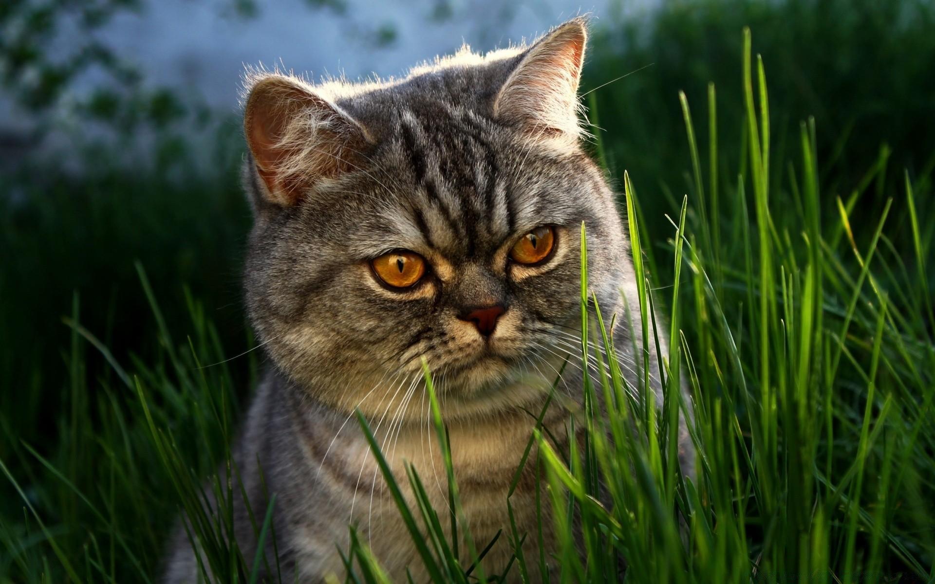картинки с котиками на компьютер