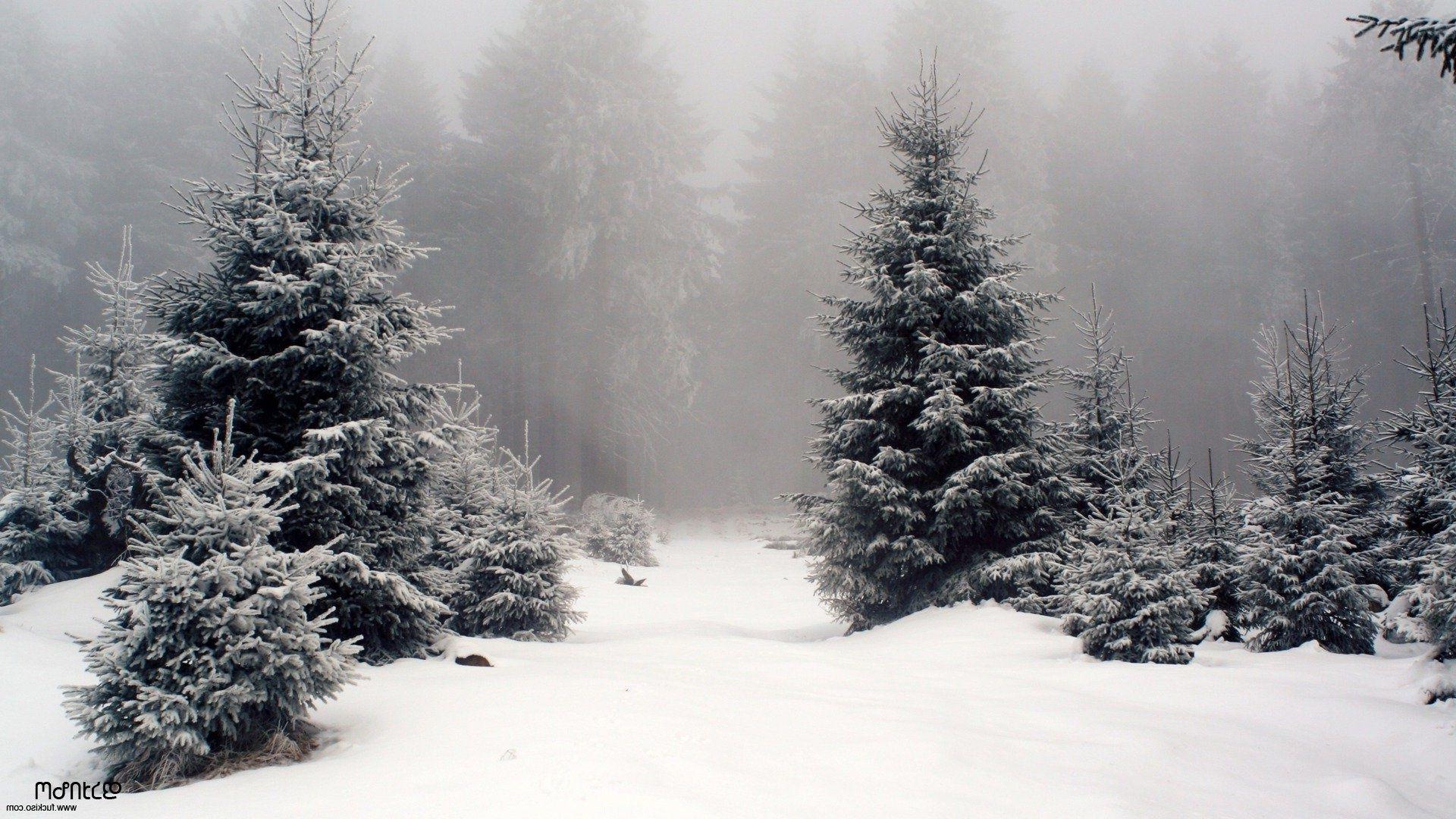 Туман утро фото