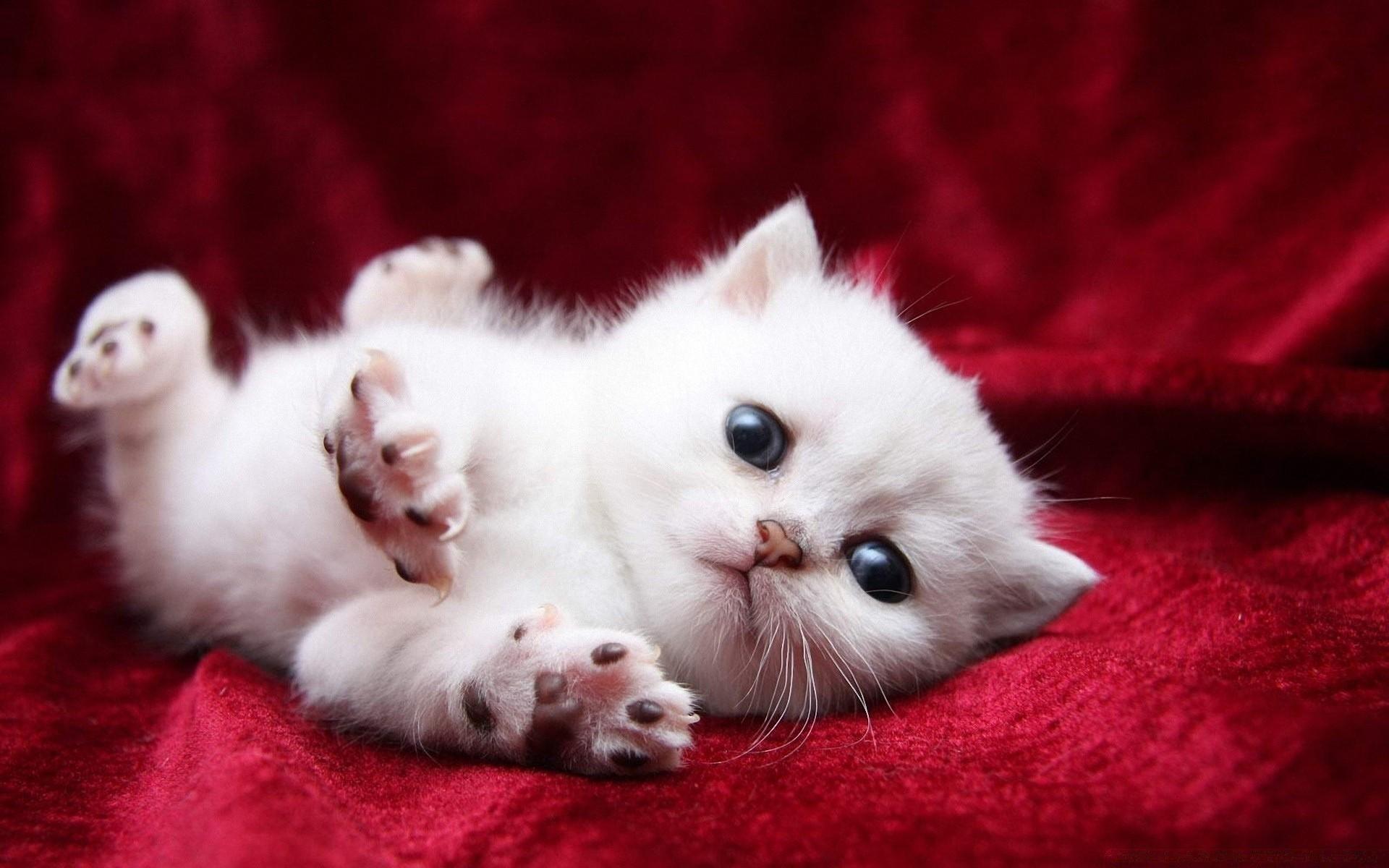 фото котенка в клетке