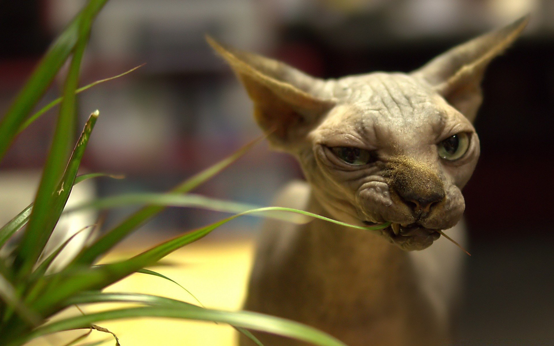 Картинки кошек на рабочий стол прикольные
