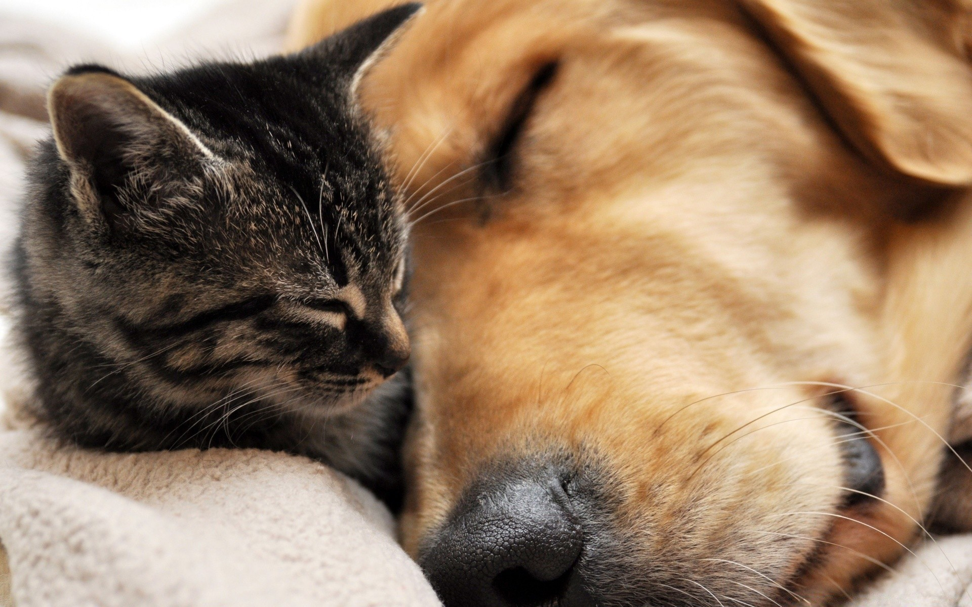 отделаны картинки на рабочий стол с собачками и котятами нас