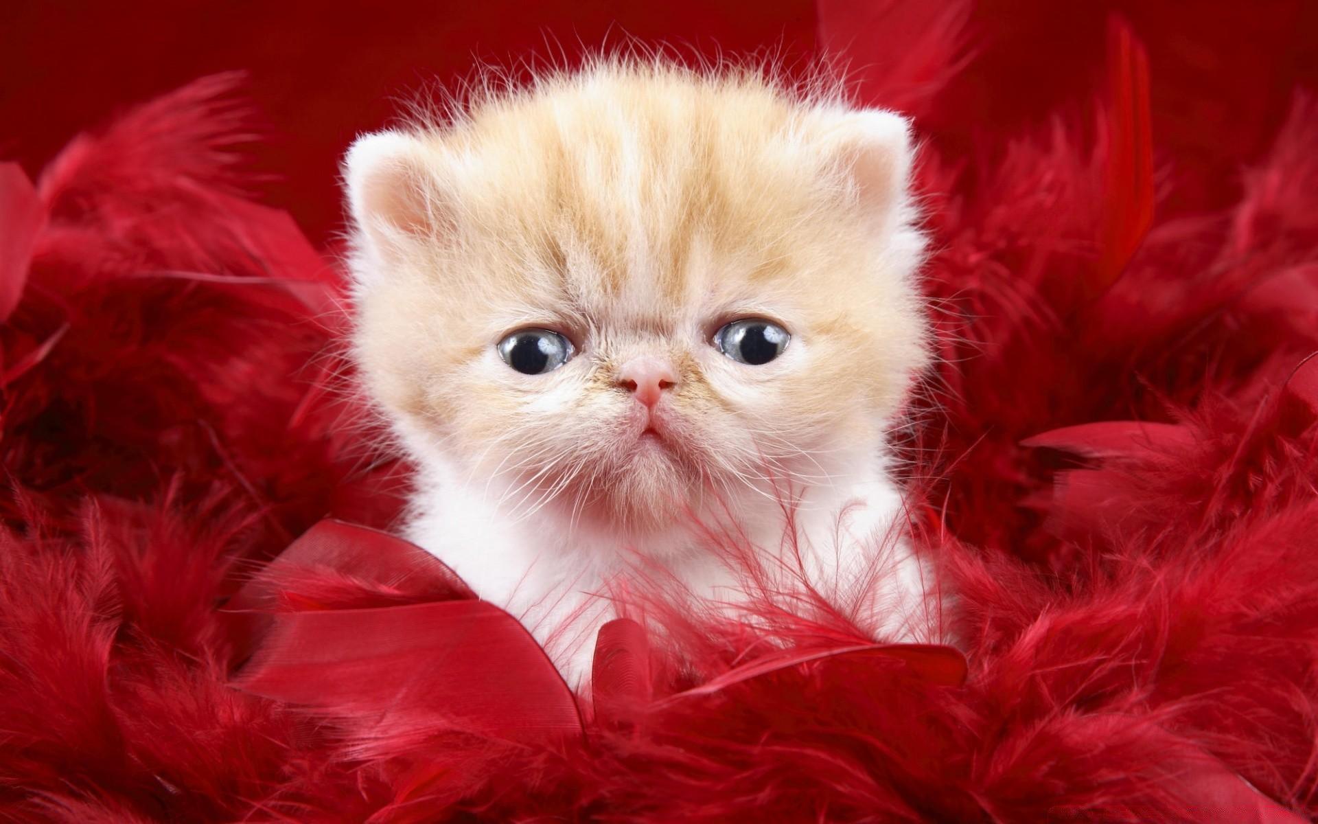 Картинки вопросами, кошки и котята картинки красивые