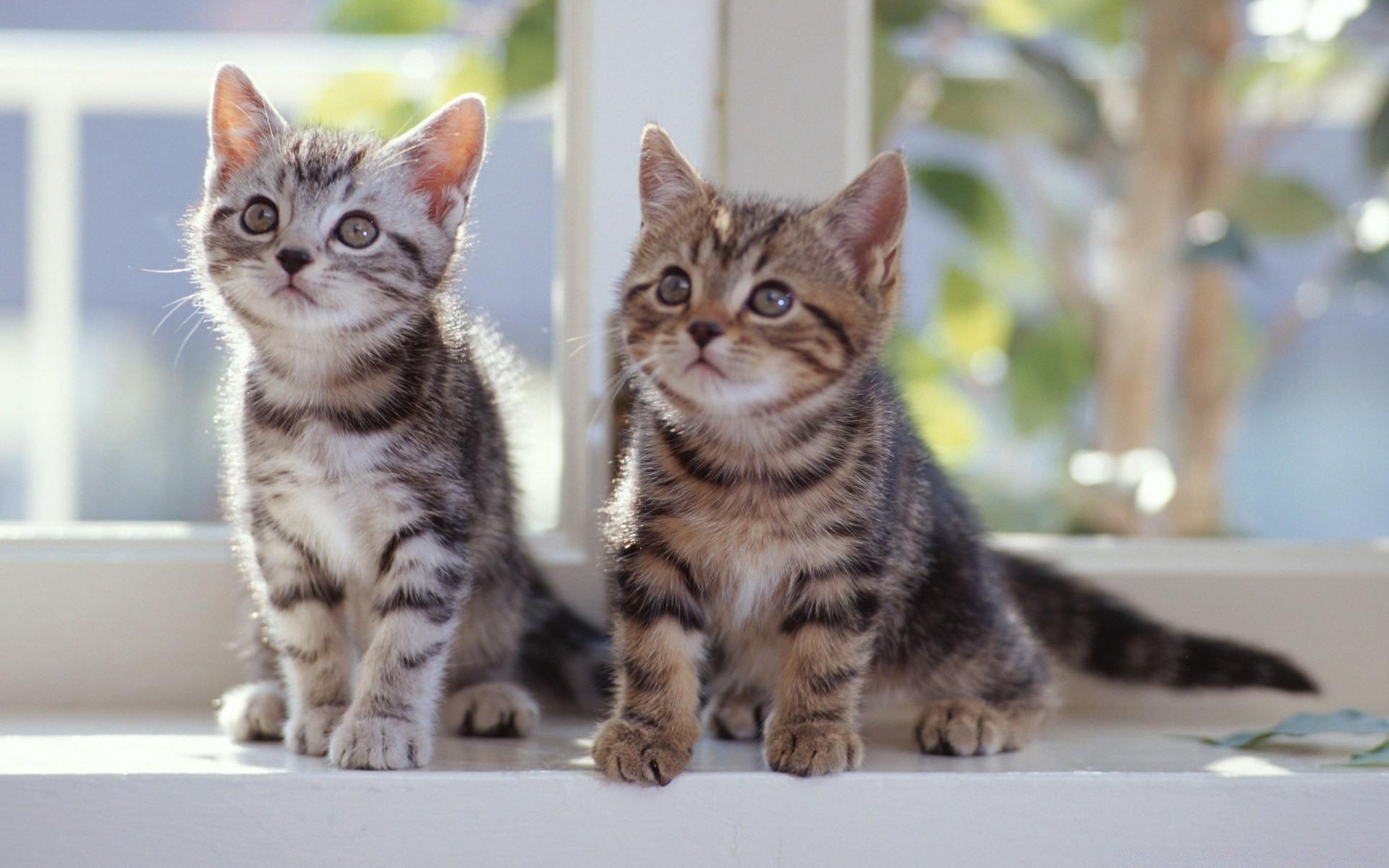 итоге обои на рабочий стол два котенка того как ребенок