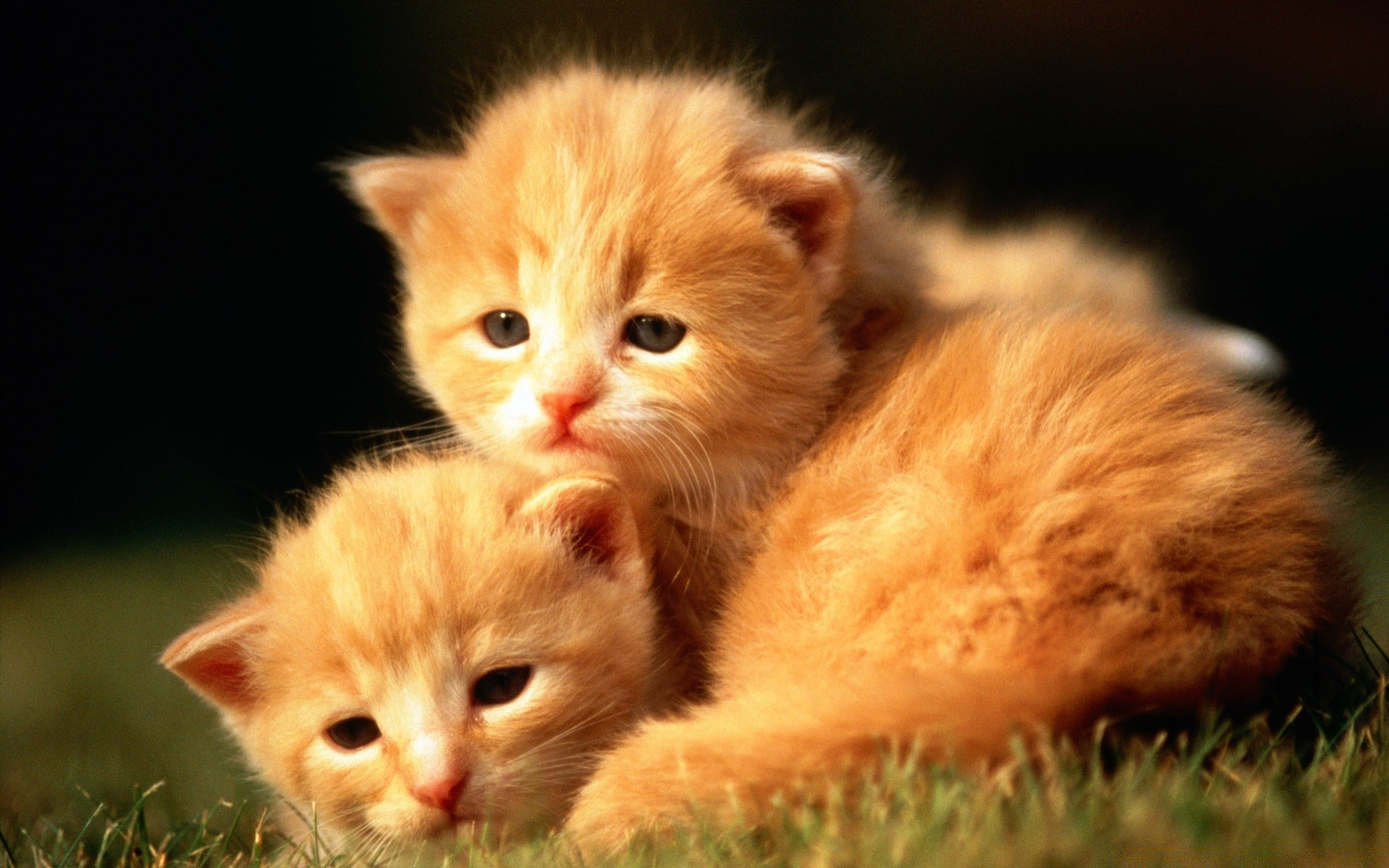 Картинки с котиками милыми