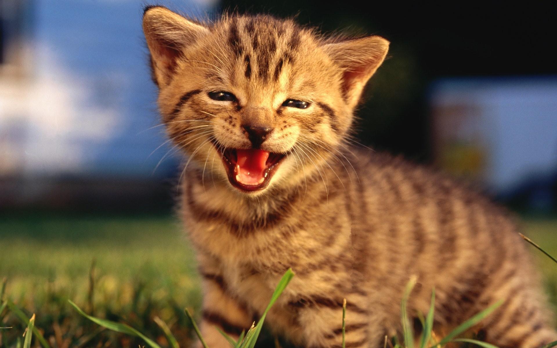 каждым лотом кошка улыбается фото одной