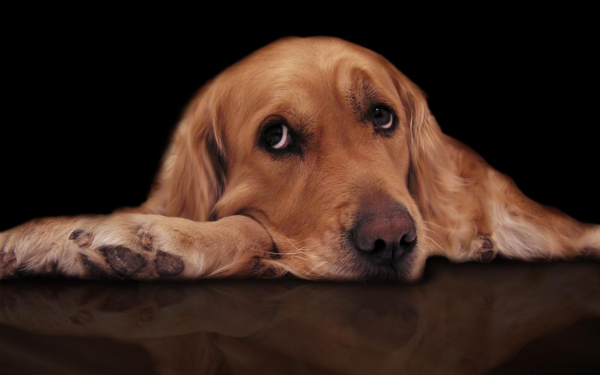 салон картинка с грустными глазами зверек скучающий прибился нему случайно