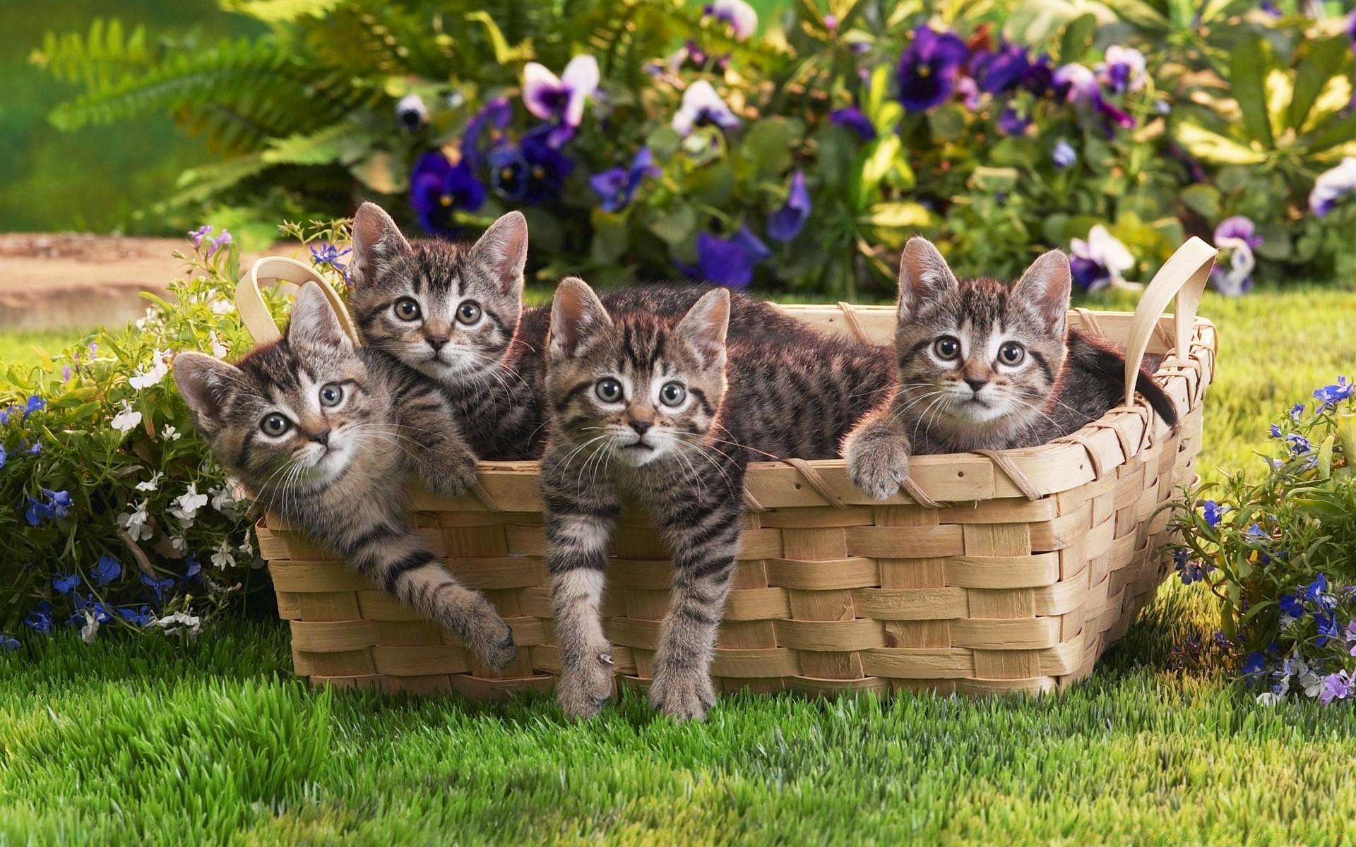 free desktop wallpaper desktop wallpaper-band of cats - HD1920×1080
