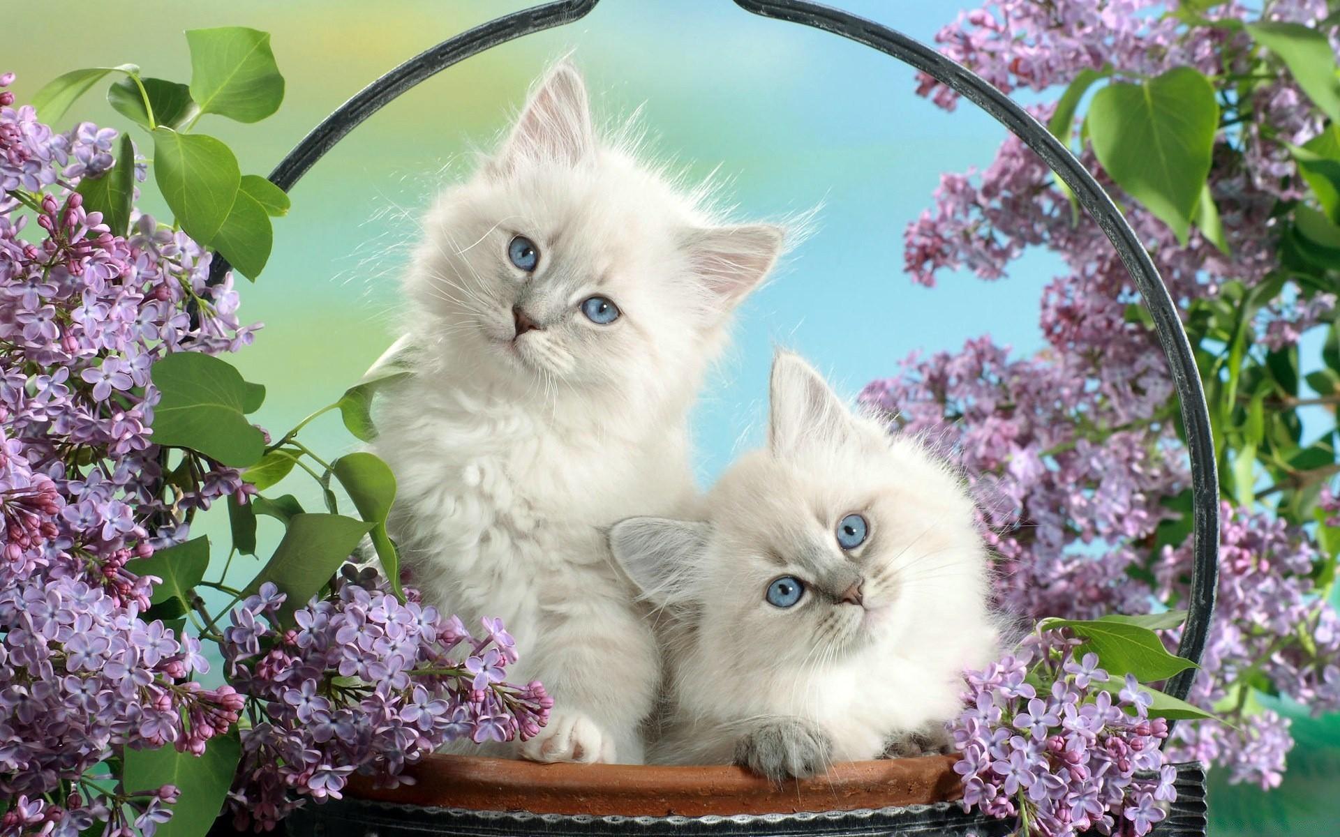 Про дашу, милые и красивые картинки животных
