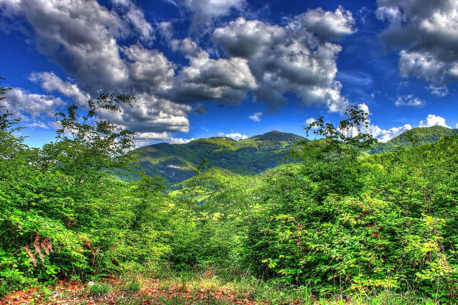 cloud rainforest
