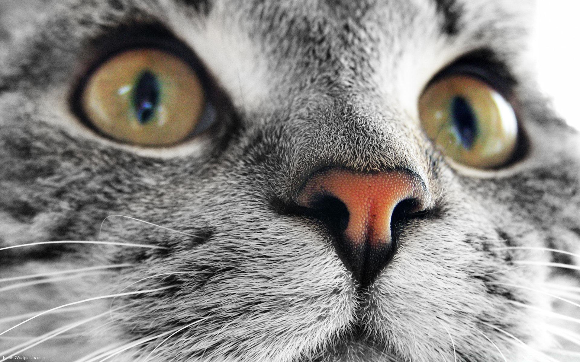 Картинки на телефон глаза животных, надписью дурь