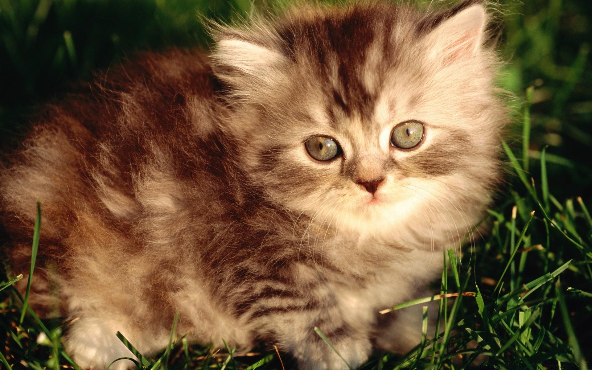 цвет посмотреть фотографии про котят уже написали