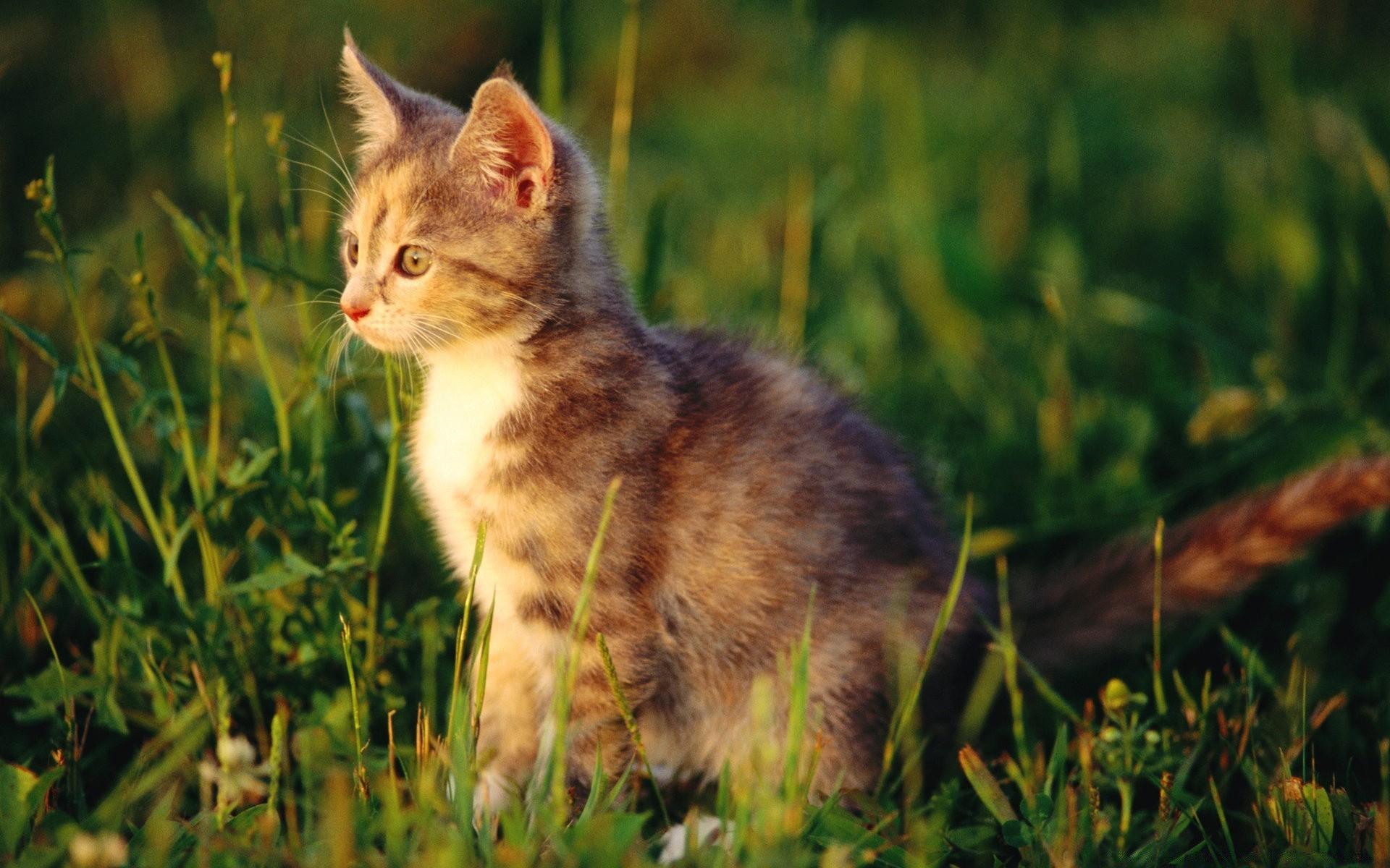 природа животное котенок кот  № 1981151 бесплатно