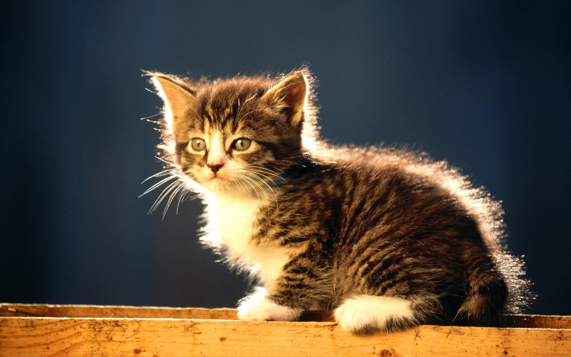 Картинки животных котов