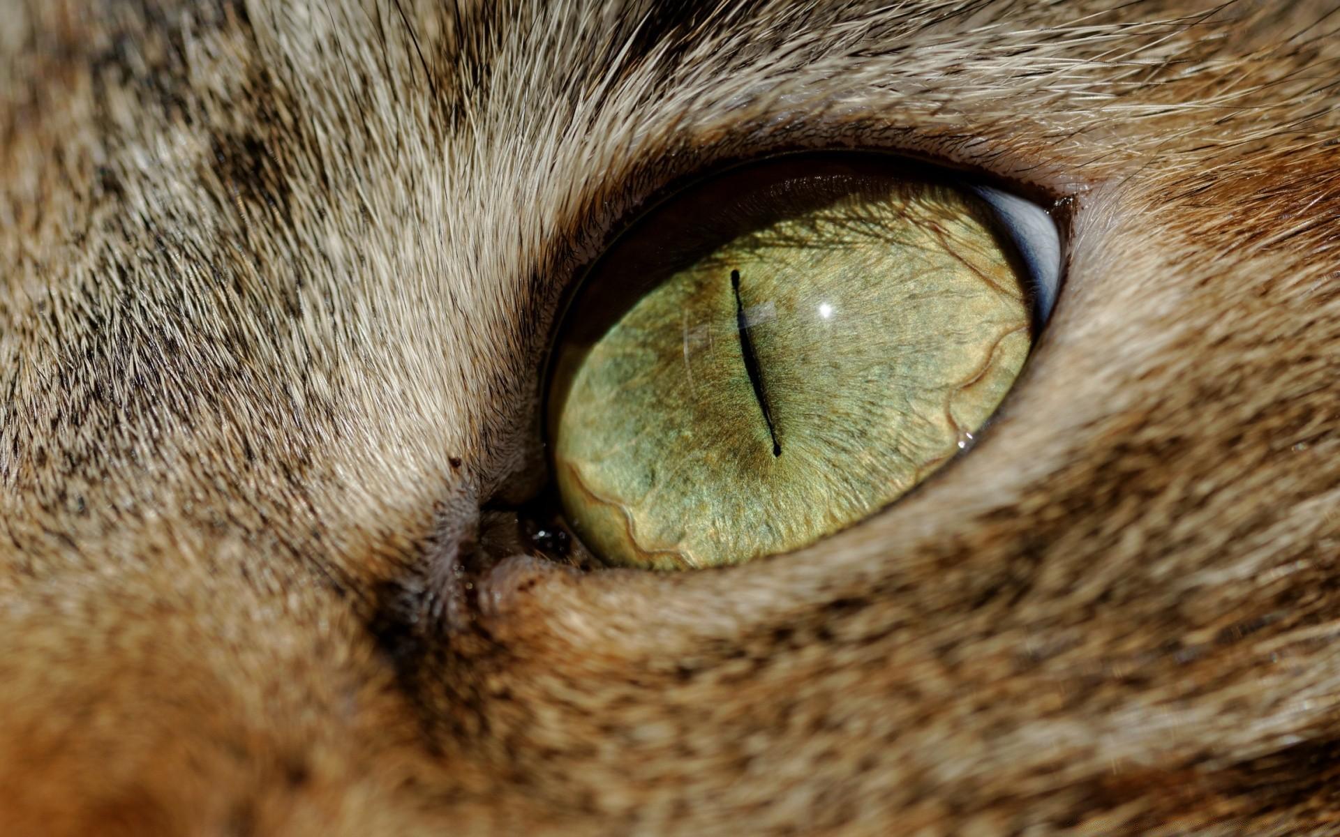 живая картинка глаз кошки вырезания трафарета