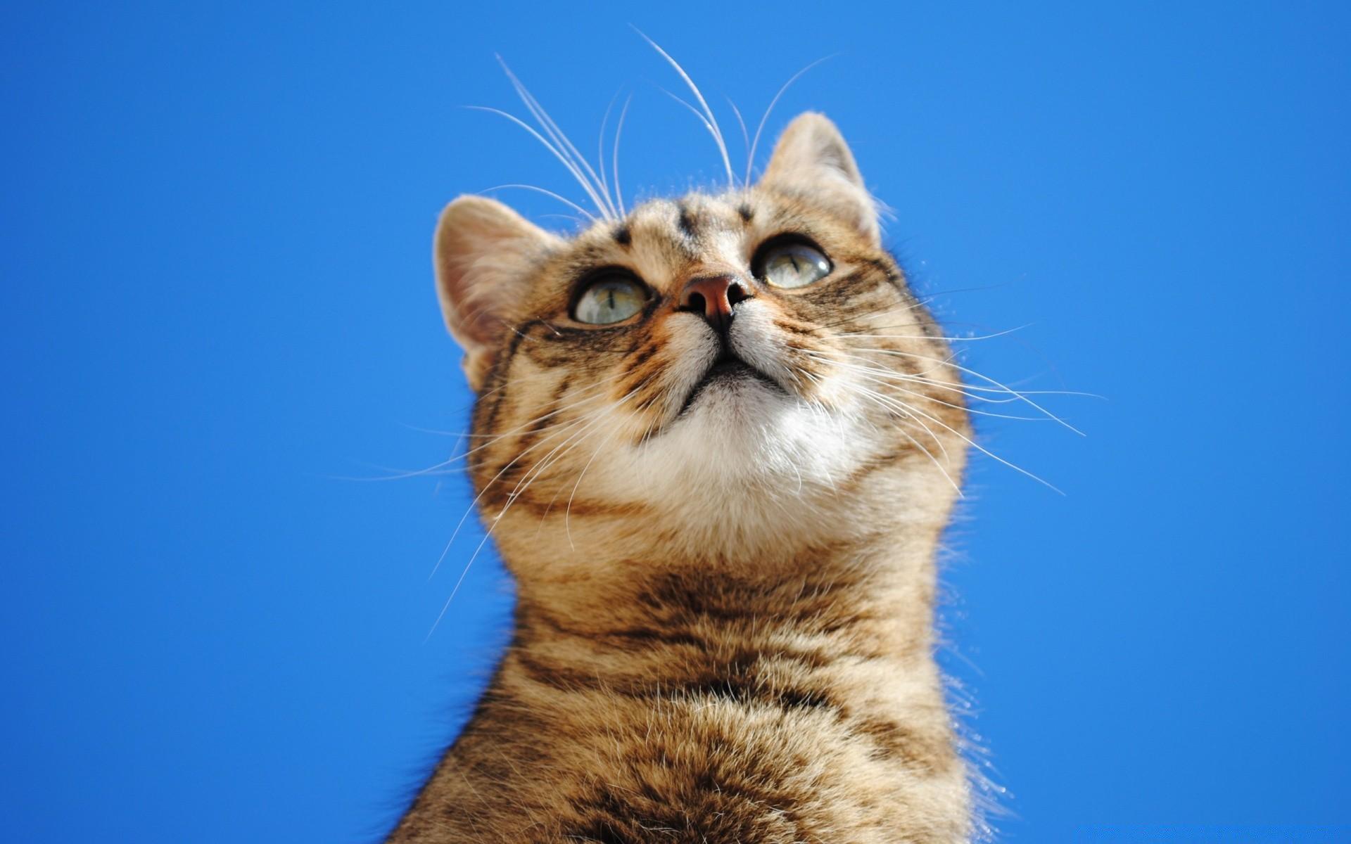 Картинки с фоном кошек