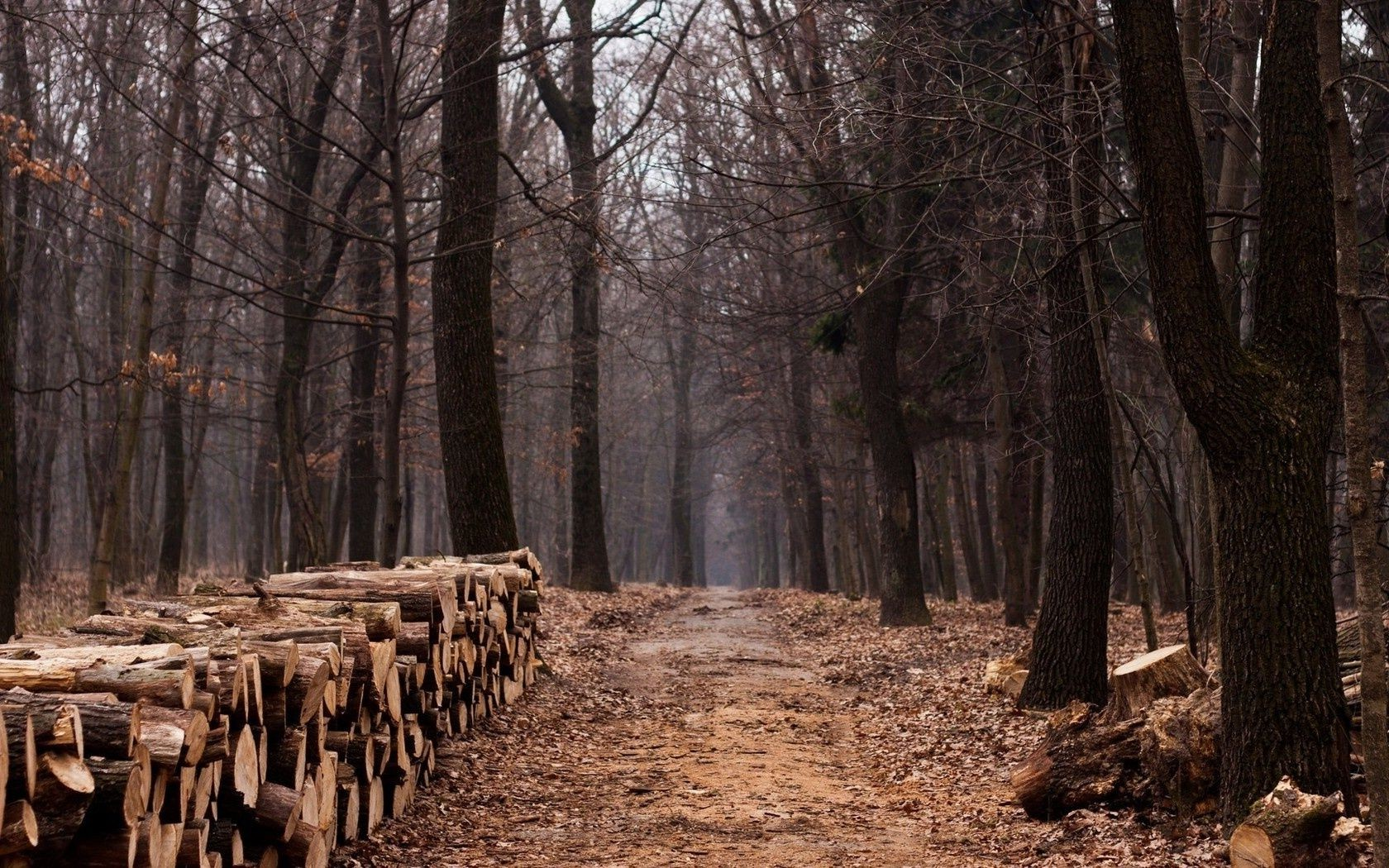 дорога trail trees path forest lumber wood лес
