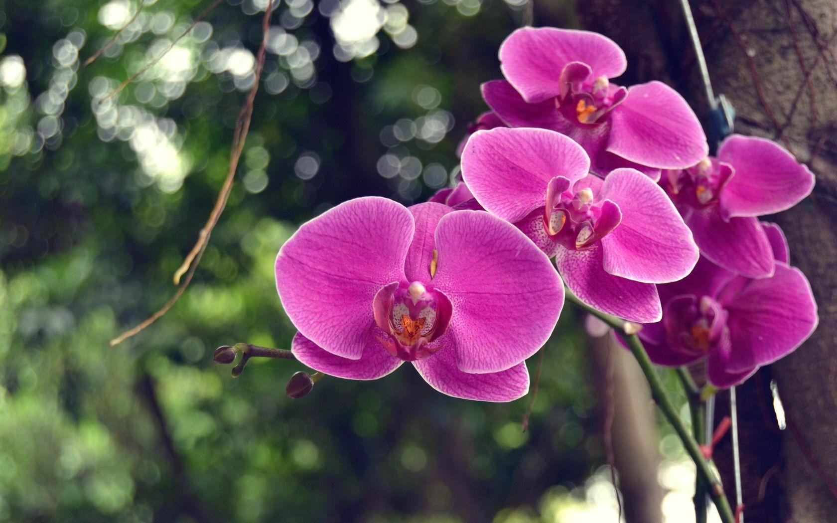 Любимая моя, картинки орхидеи на рабочий стол красивые большие на весь экран