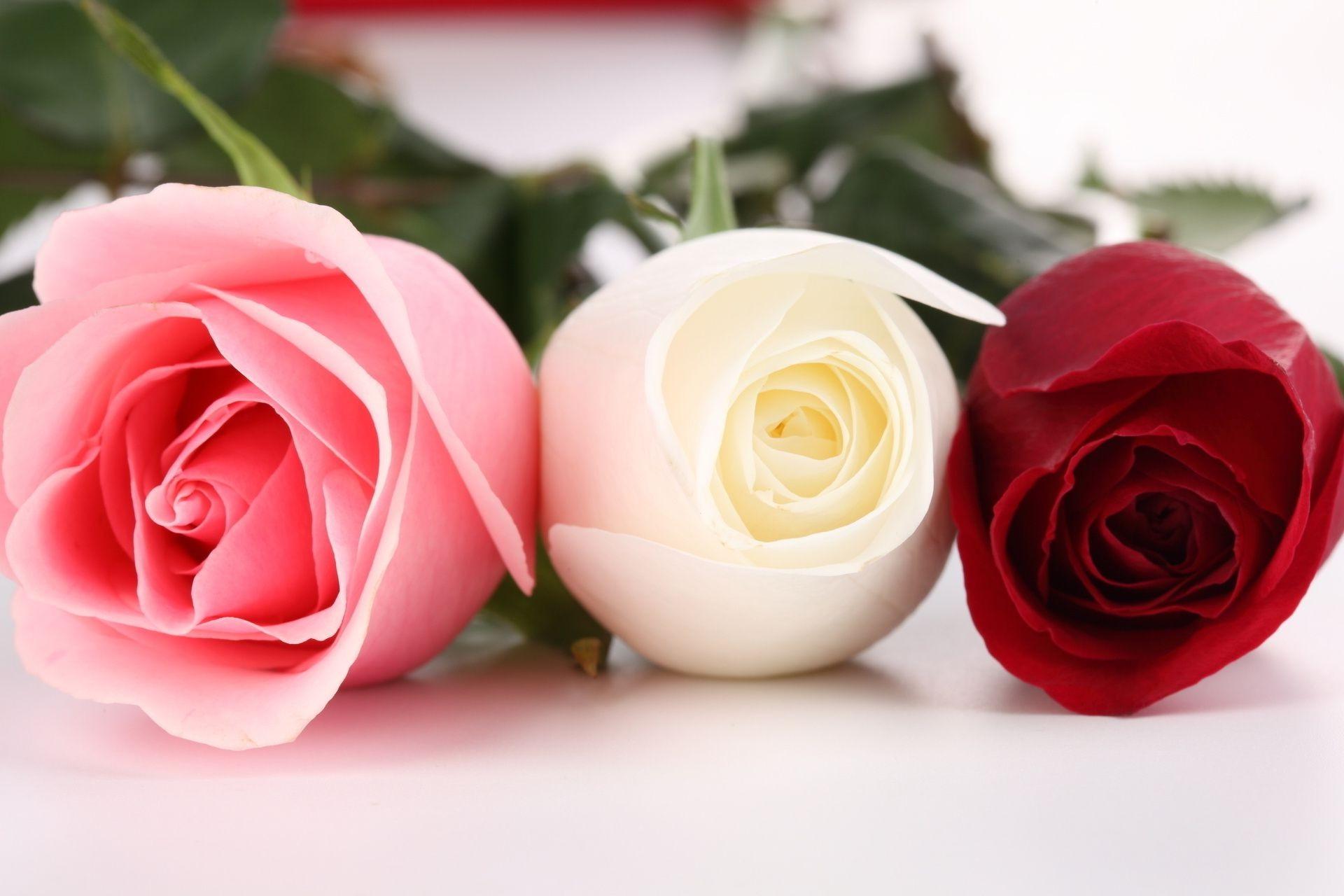 Розы скачать
