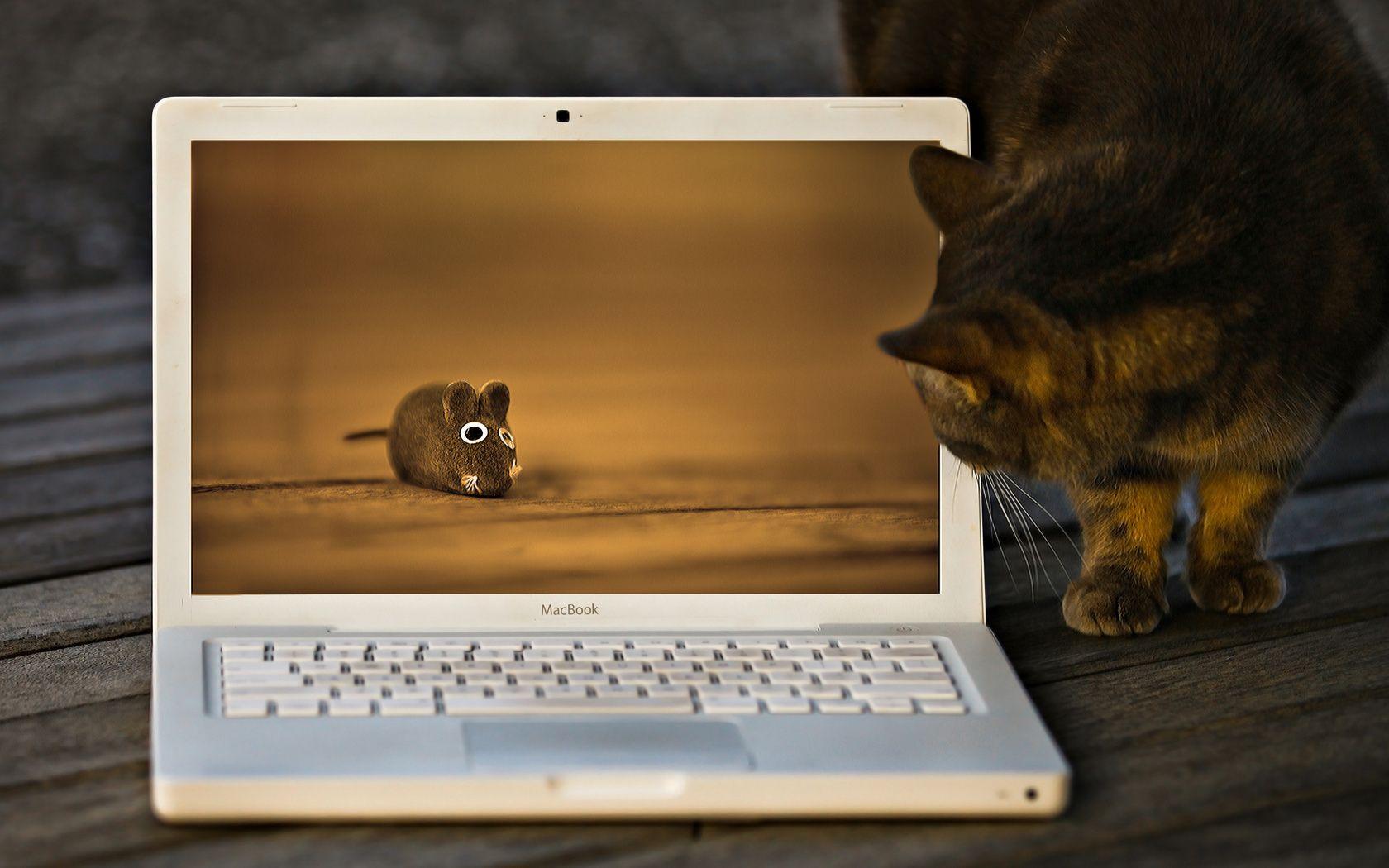 Обои на ноутбук прикольные