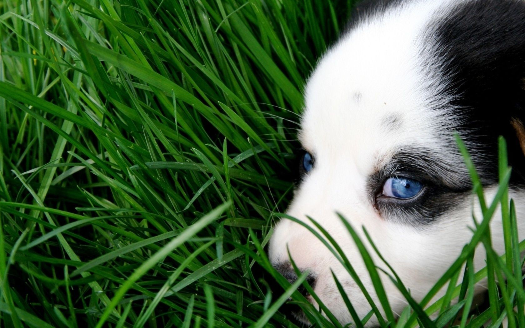 Обои Собака, grass, animals. Собаки foto 16