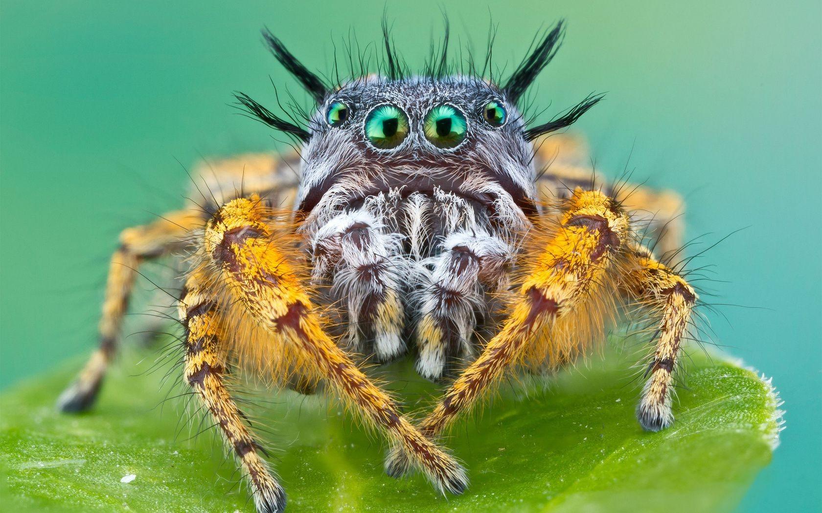 Обои насекомое, паук, лист. Макро foto 15