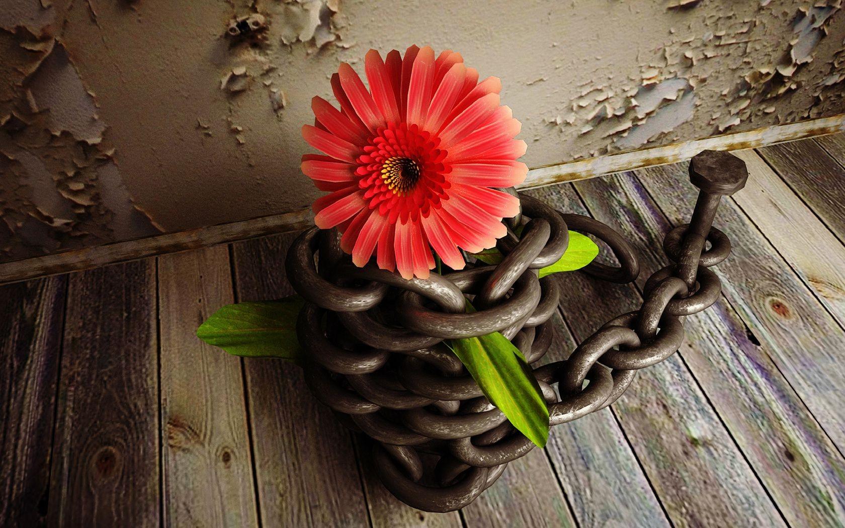 still life black and white flower Обои для �або�его ��ола