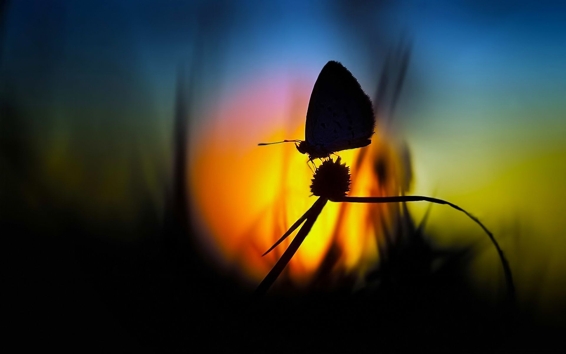 Микрофоном днем, картинки цветы на фоне заката