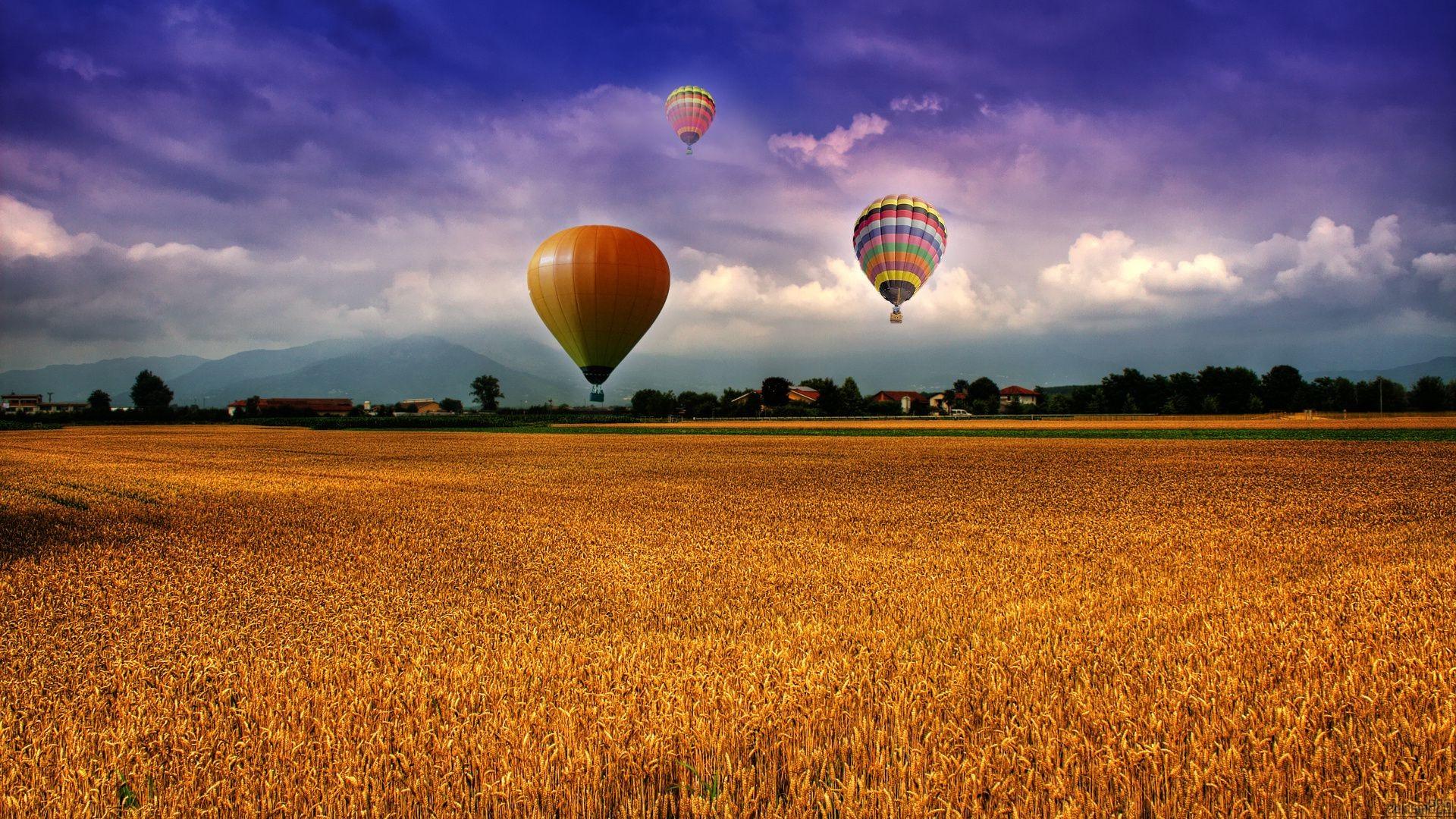 Картинки с полем пшеничным