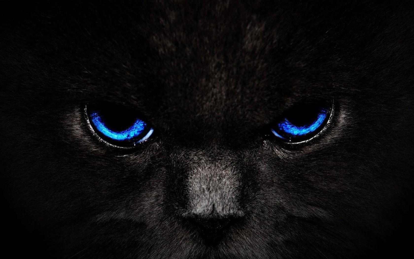 Картинки на телефон глаза животных