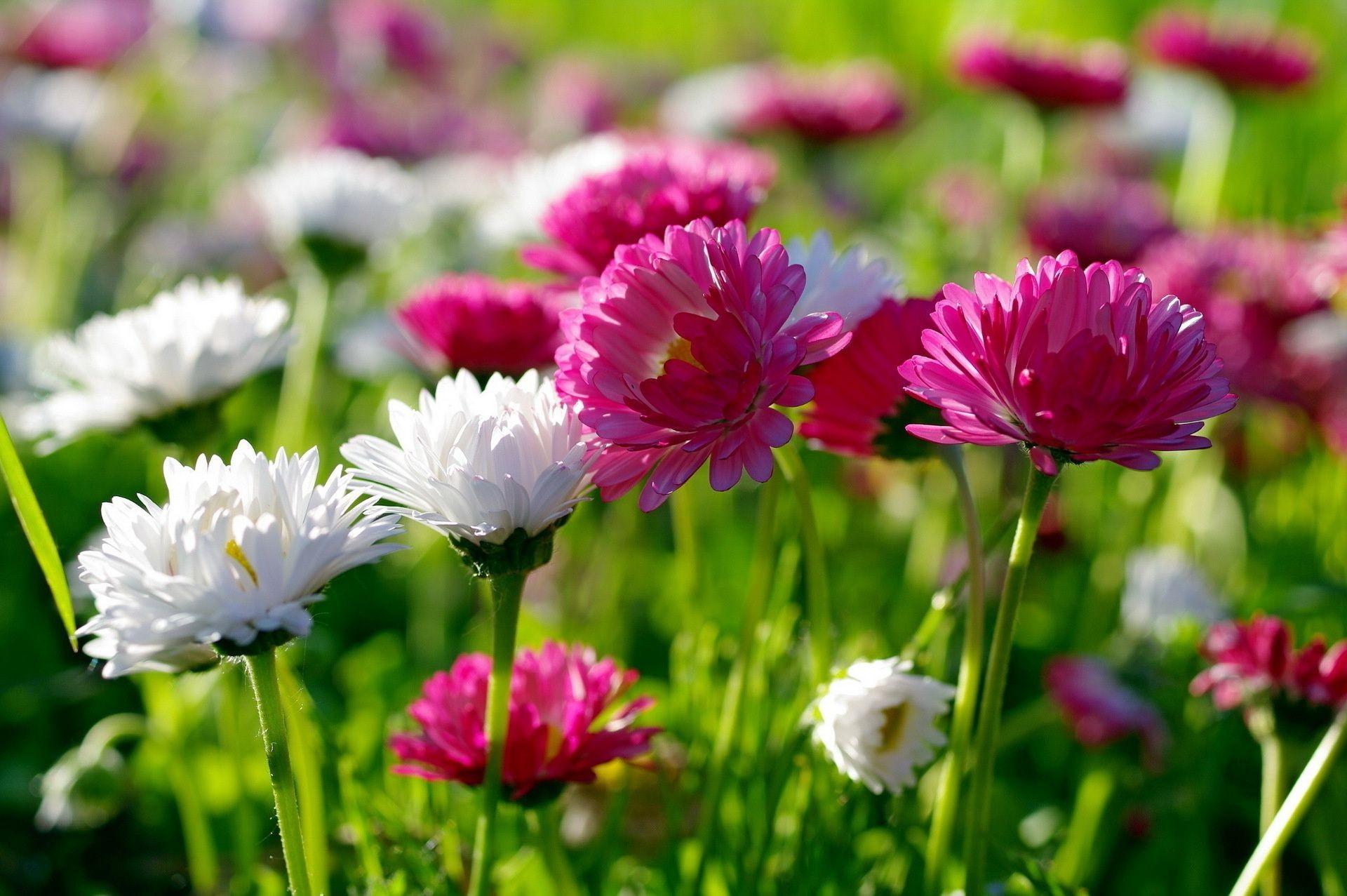 обои природы и цветов на рабочий стол